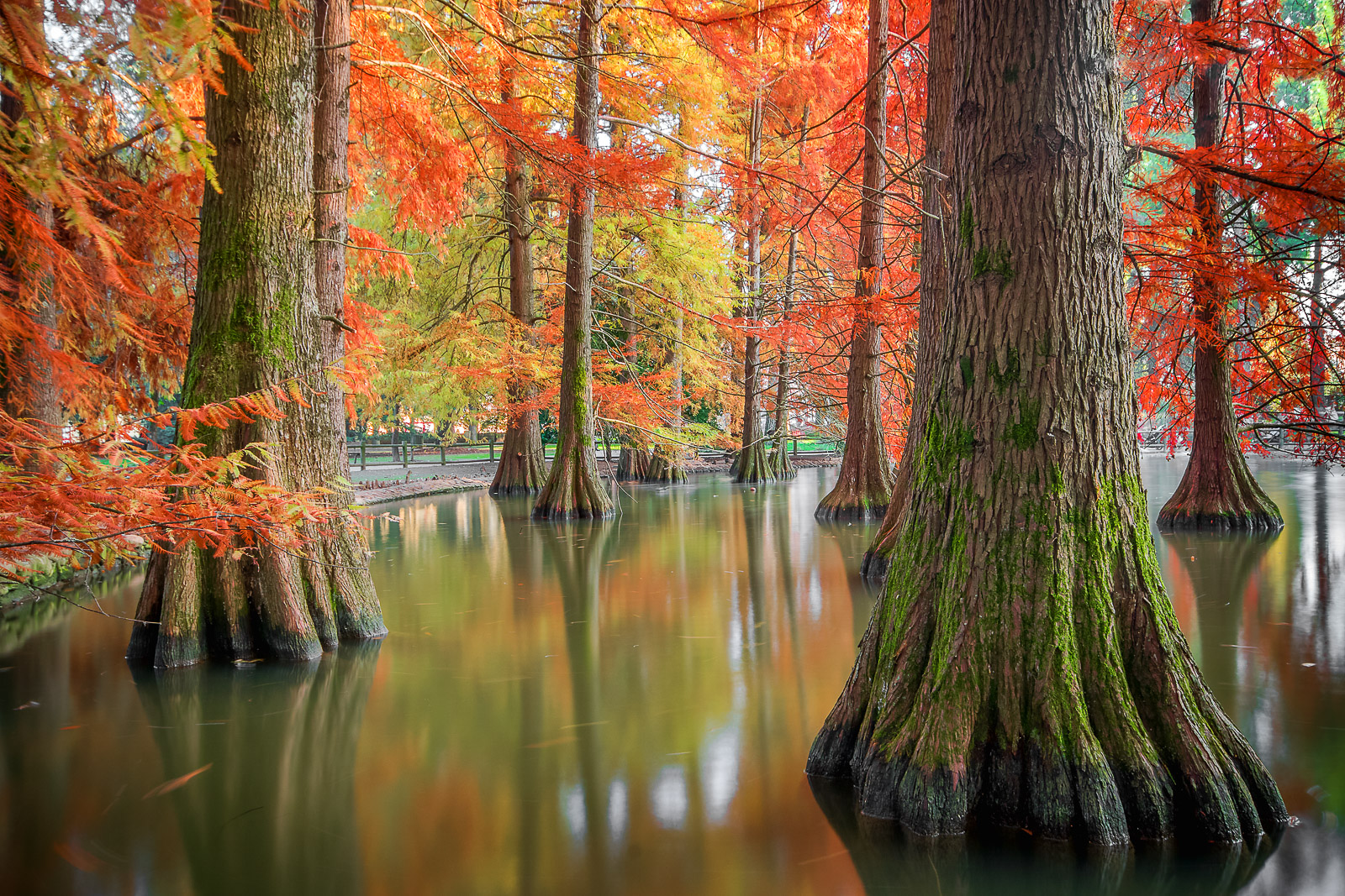 Autumn in the lake...