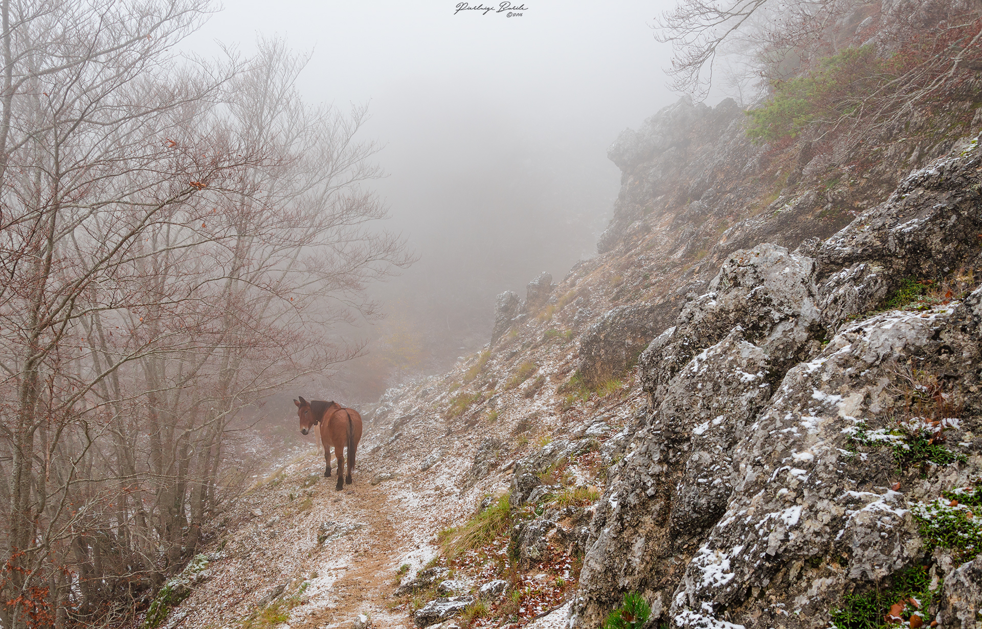 Horse in the mist...