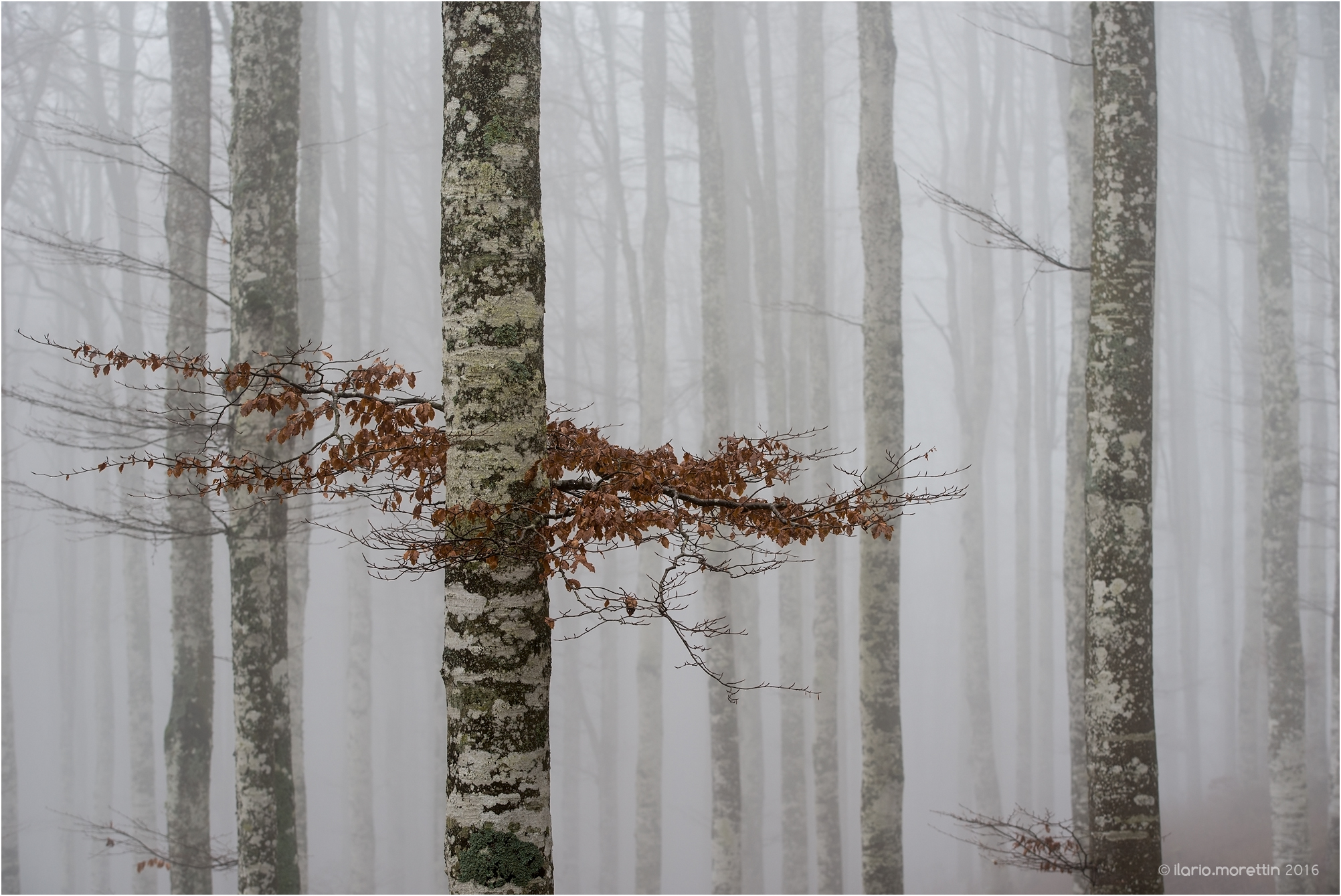 The fog in the forest...