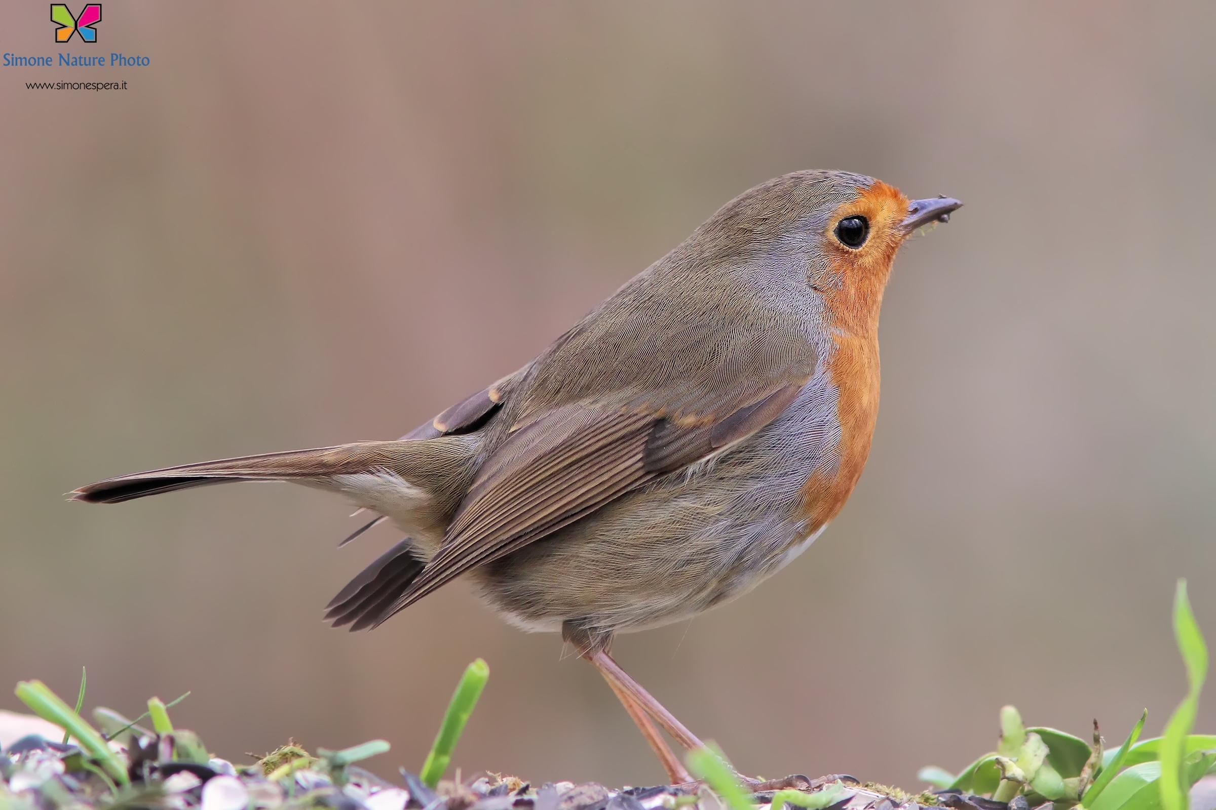 Robin.......