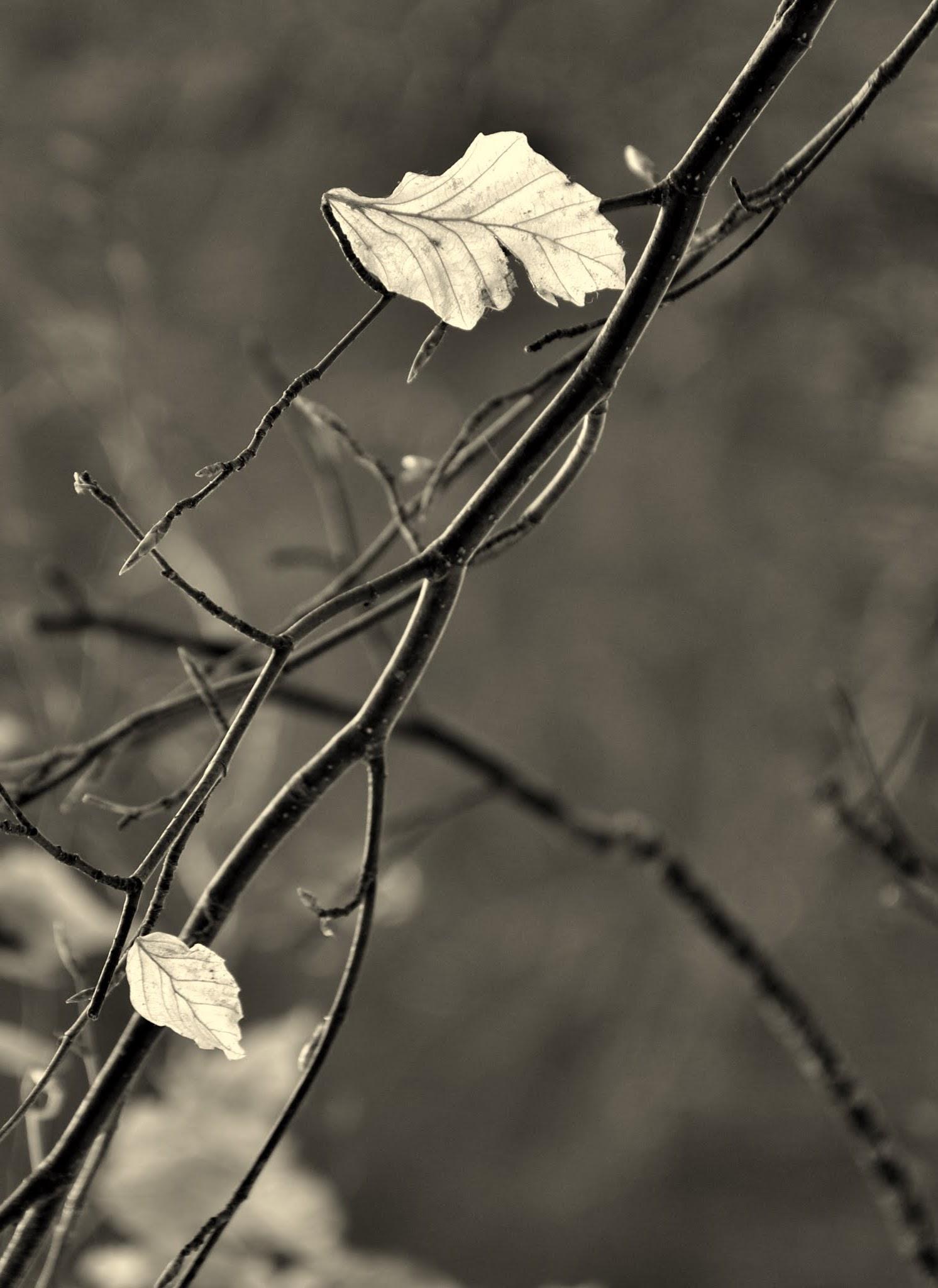Sospese nel vento......