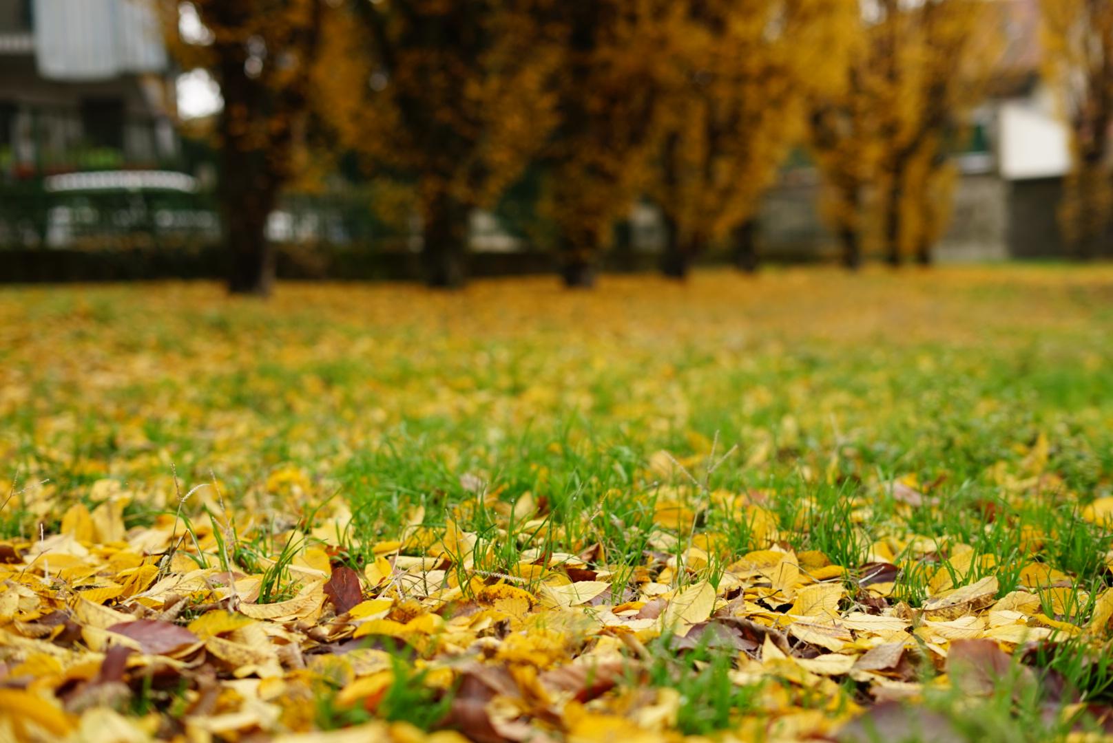 Autumn has the worm...