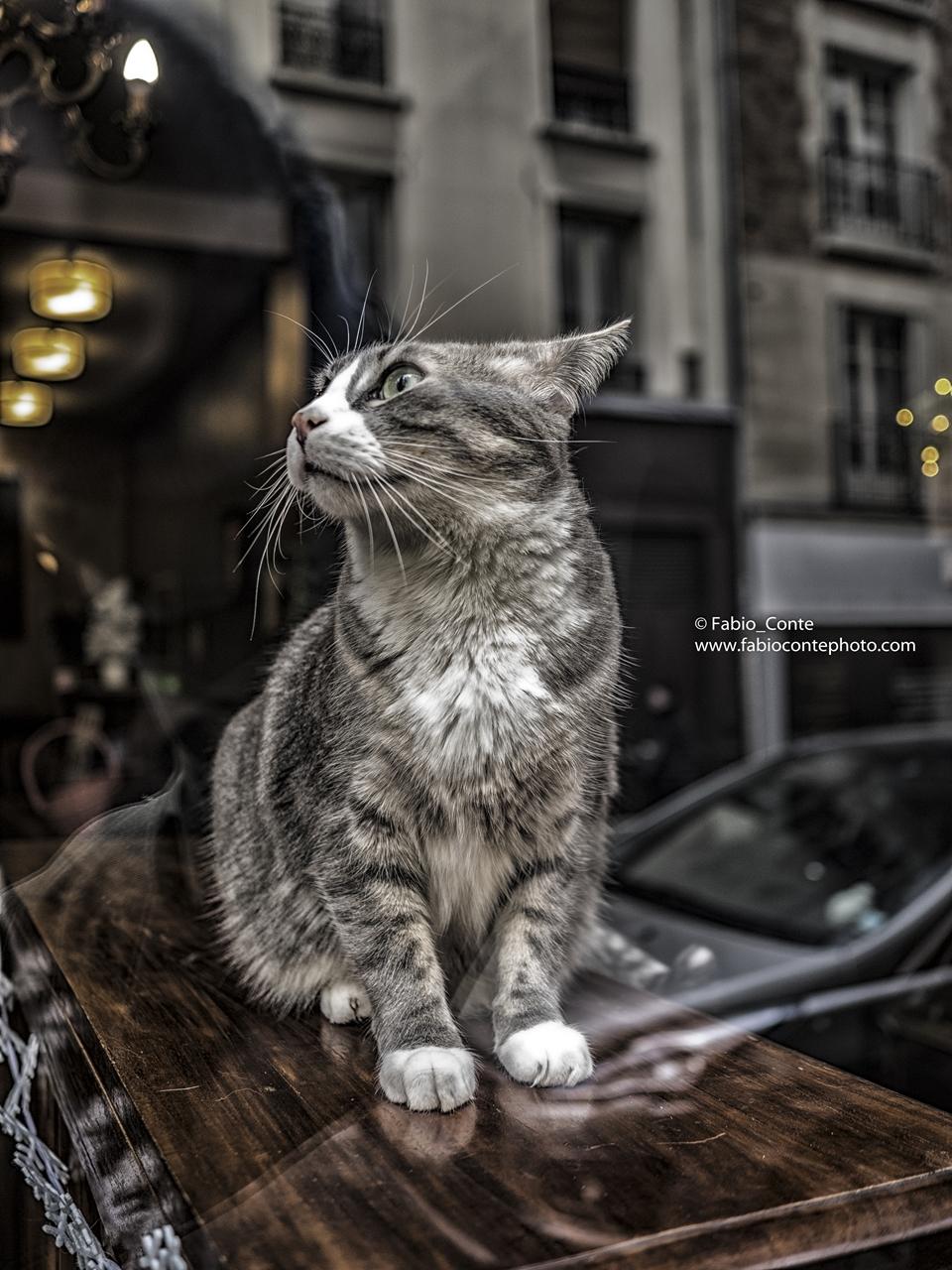Le Café des chats Bastille, 9 rue Sedaine, Paris....
