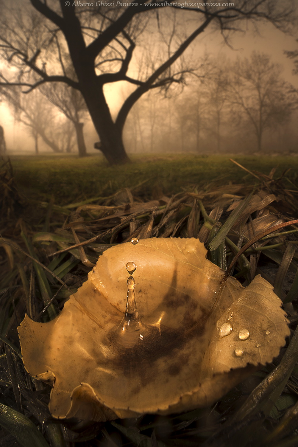 Drops in the misty dawns...