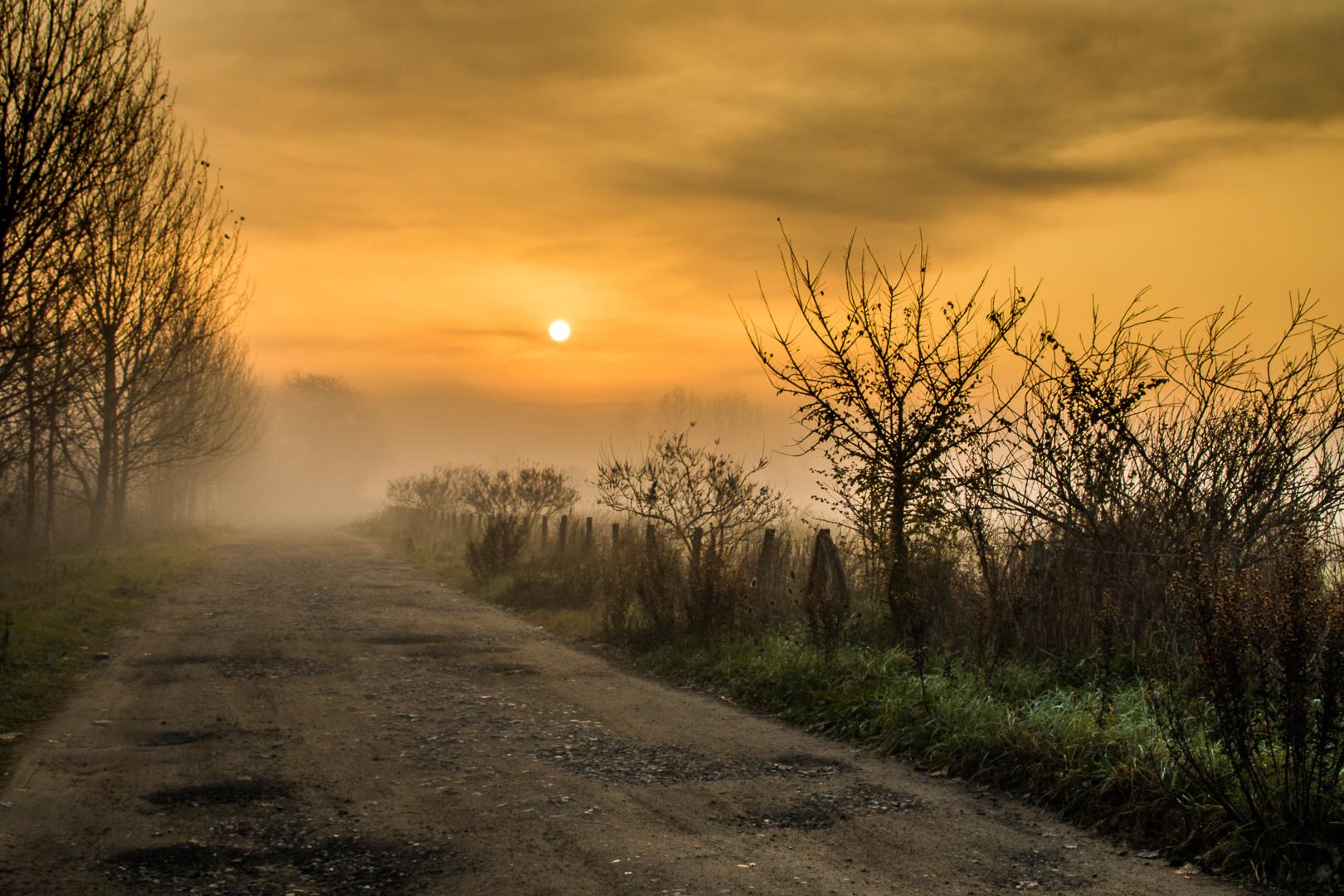 Tra sole e nebbia...