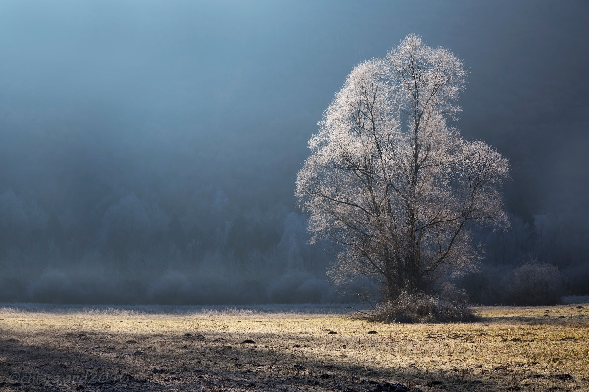 Spirit of the frost .......