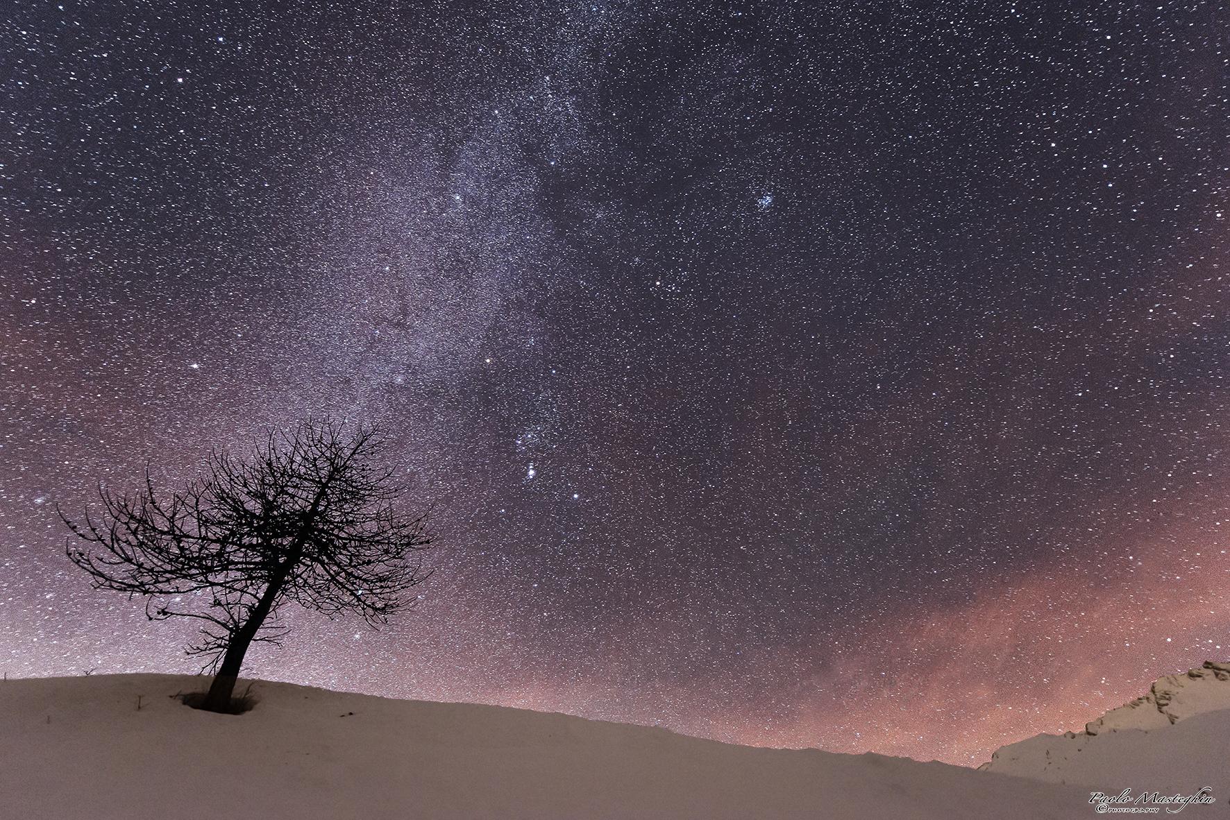 tree of stars ......