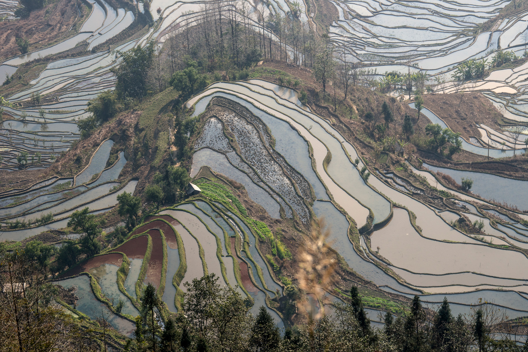 China rice terraces...