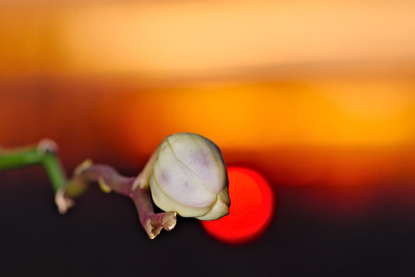... At sunset...