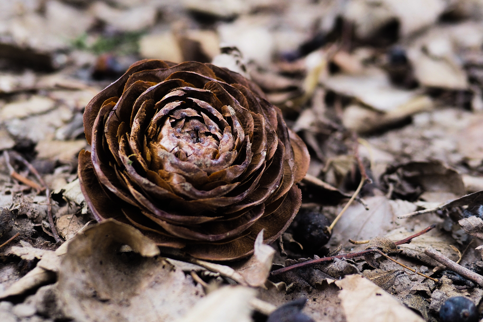 Beautiful like a rose...