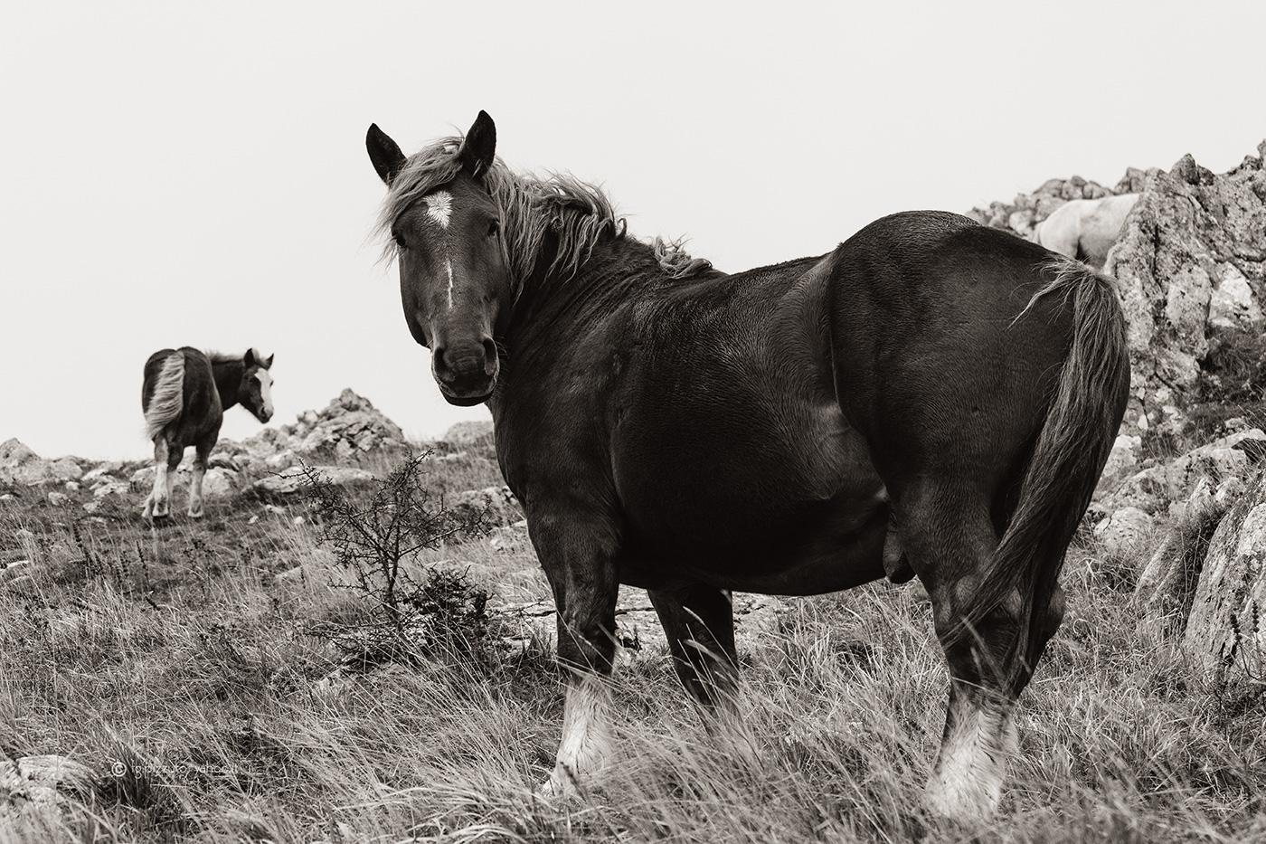 Cavalli in montagna...