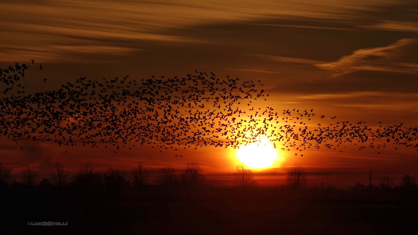 01/01/2017, the sunrise with geese....