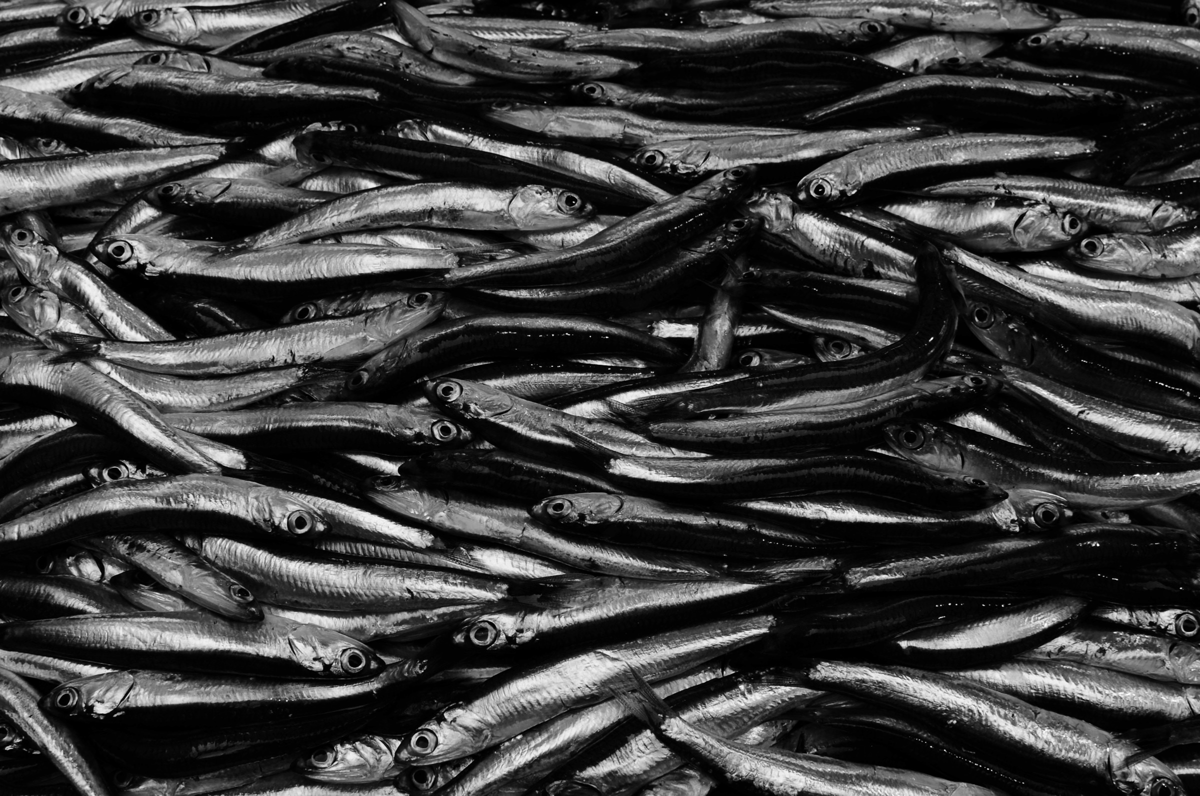 Anchovies...