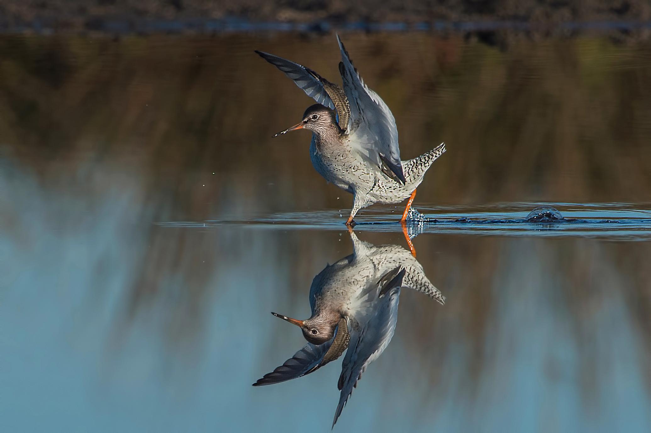 """lo """"specchio d'acqua""""..."""