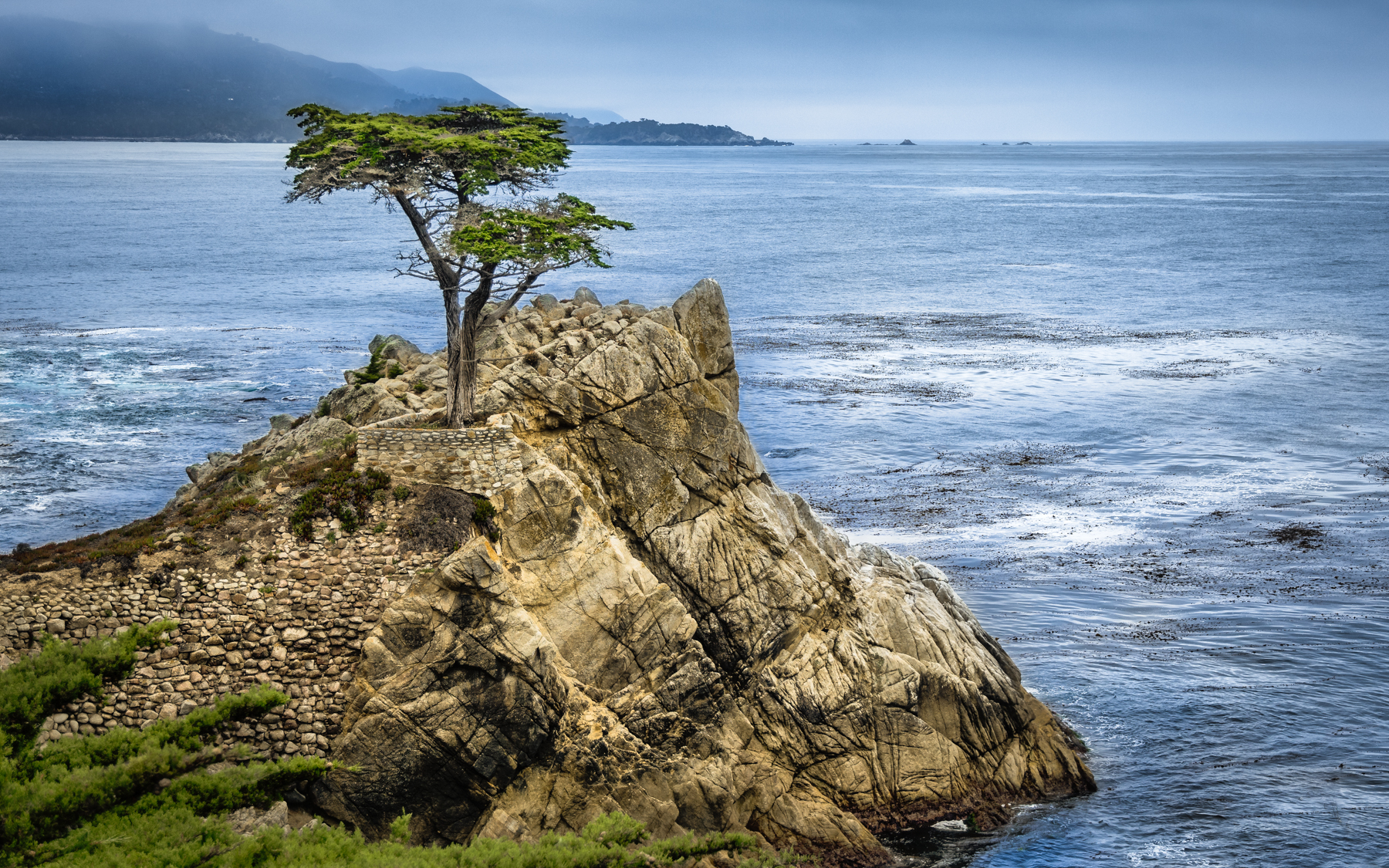 The lone cypress...