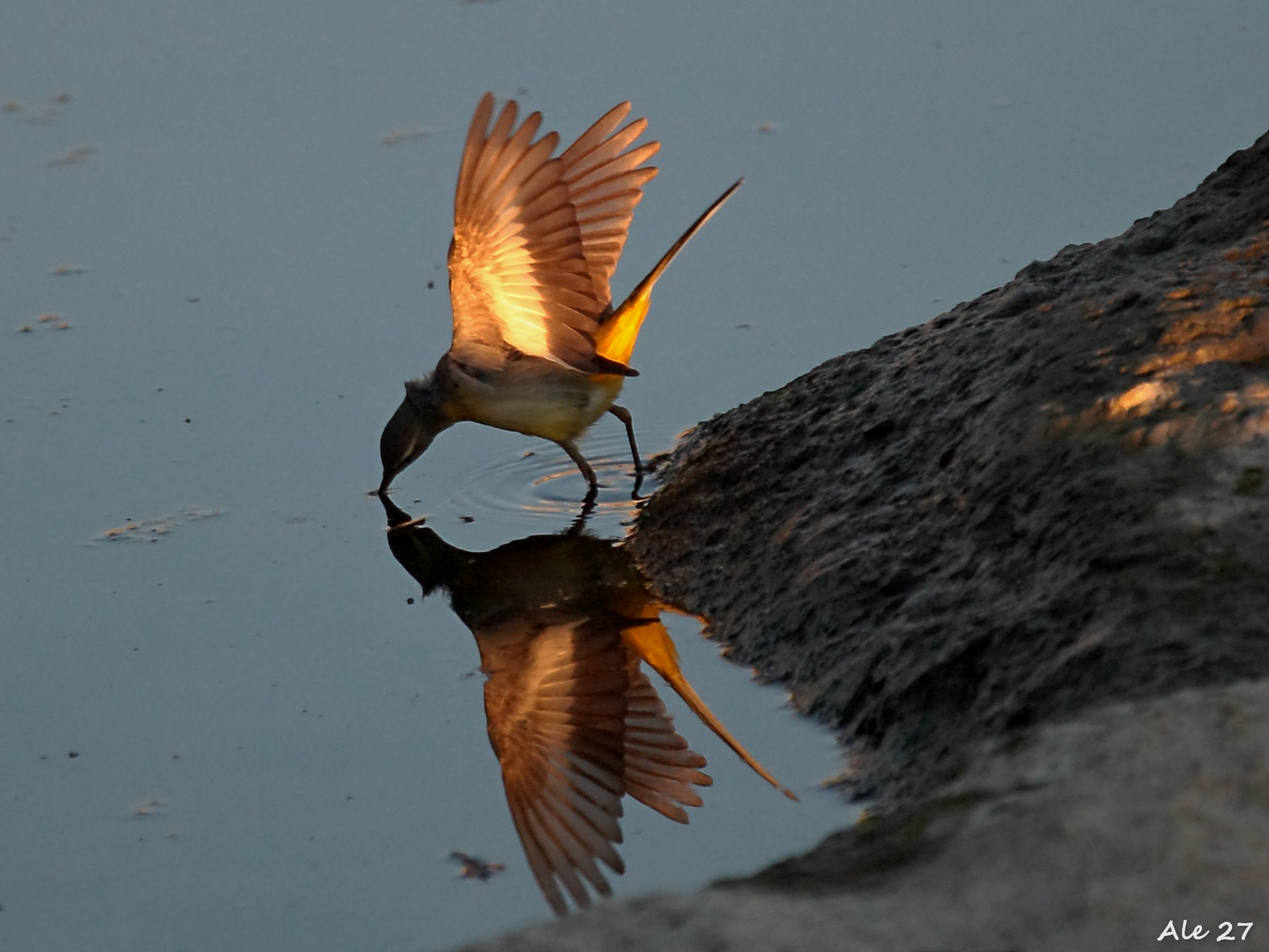 .... With golden wings ......