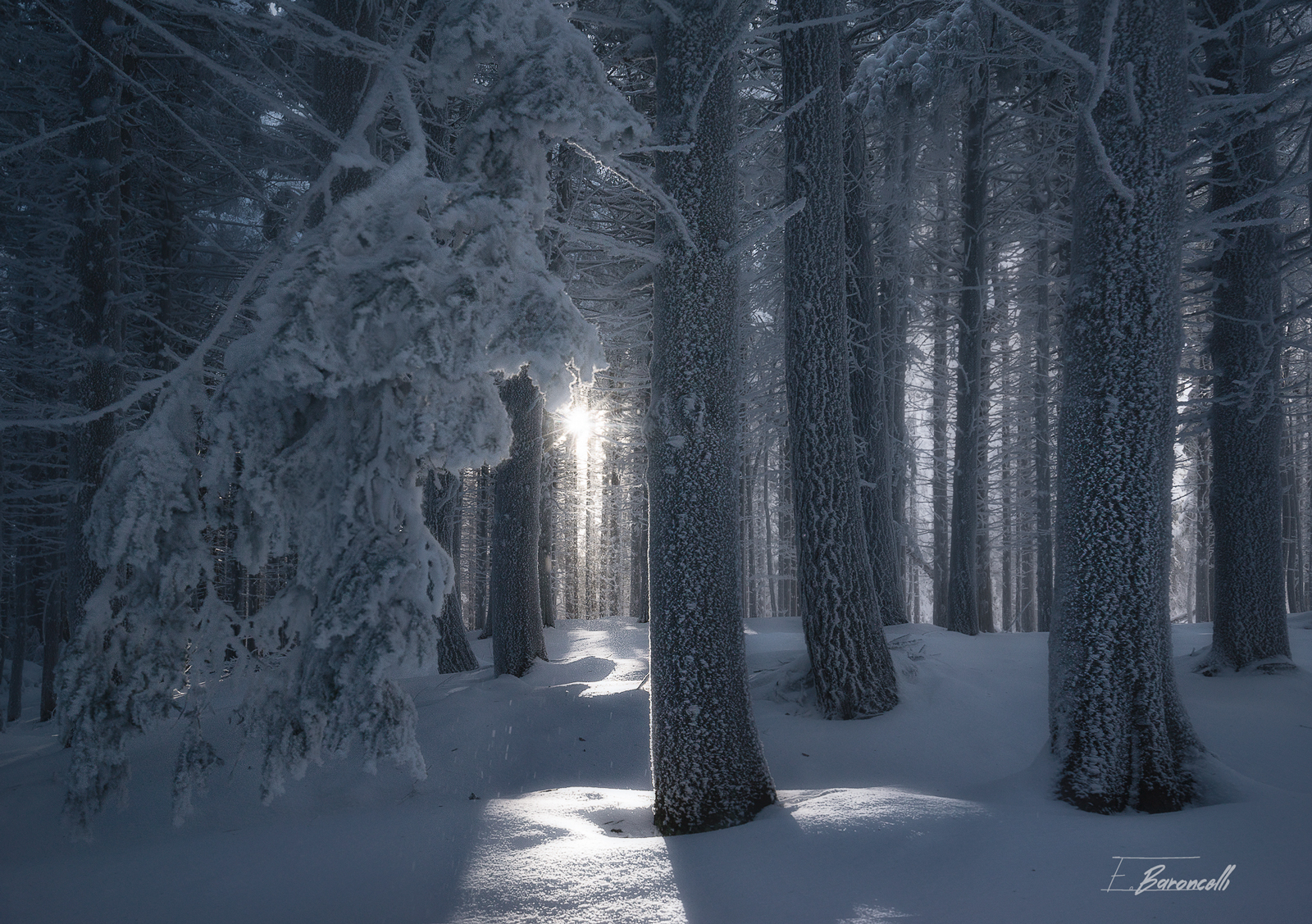 Crystal Forest...