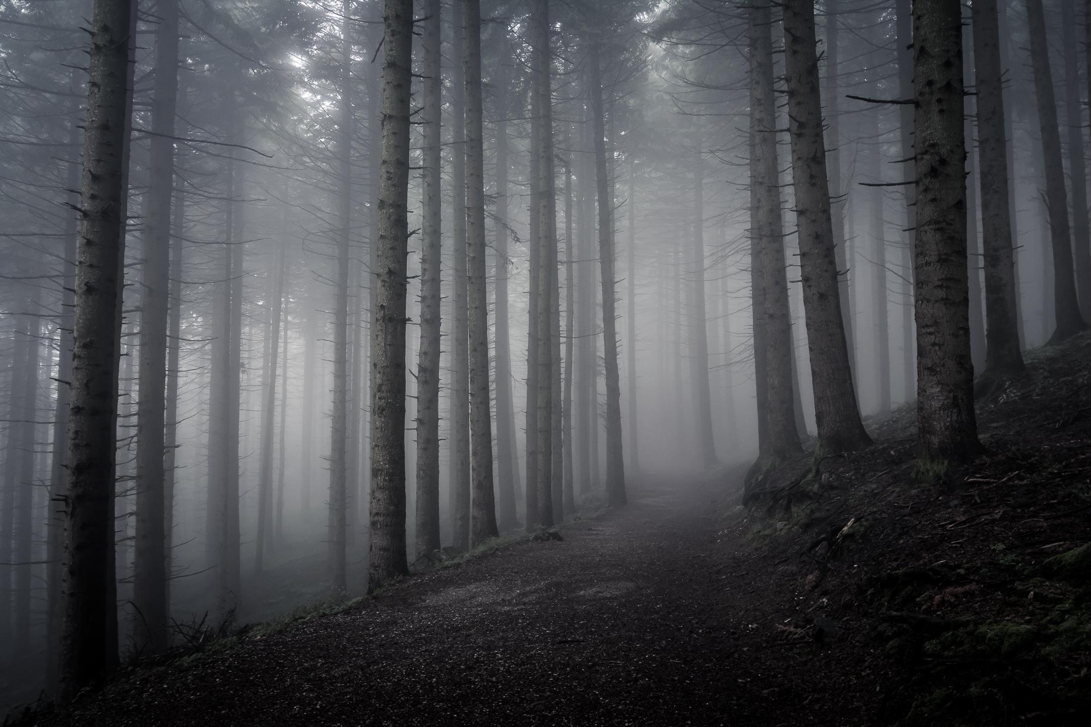 C'è una strada nel bosco...
