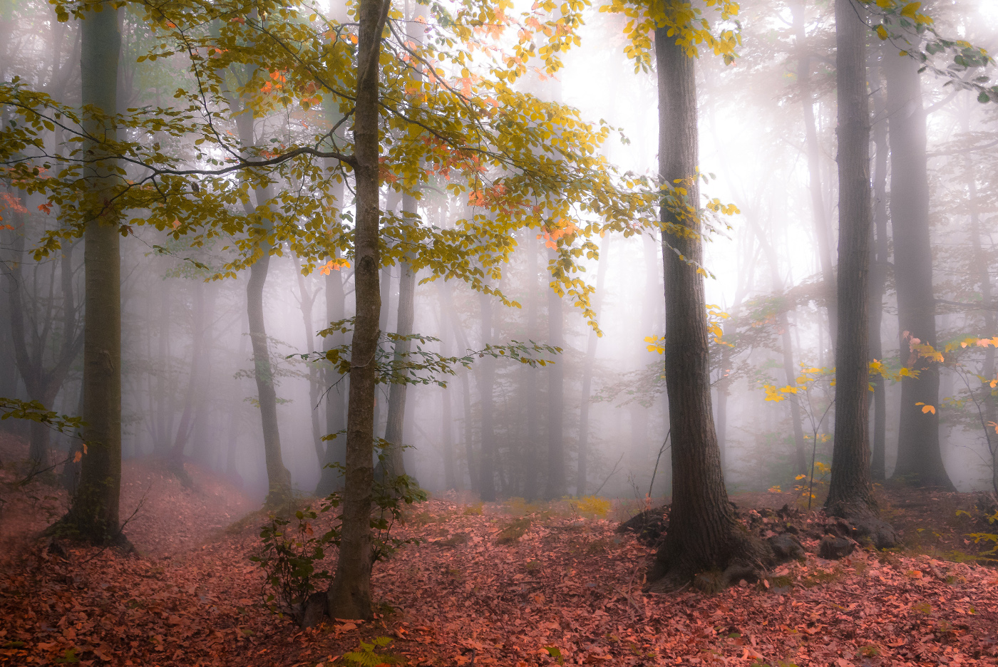Fog in the forest...