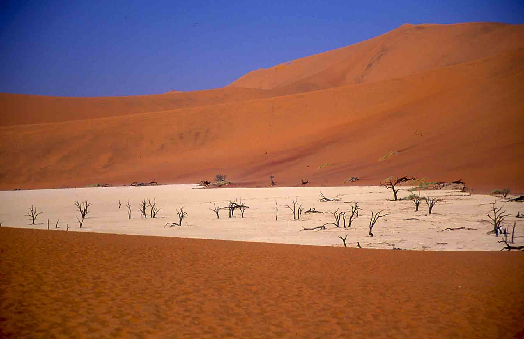 Namib Desert...