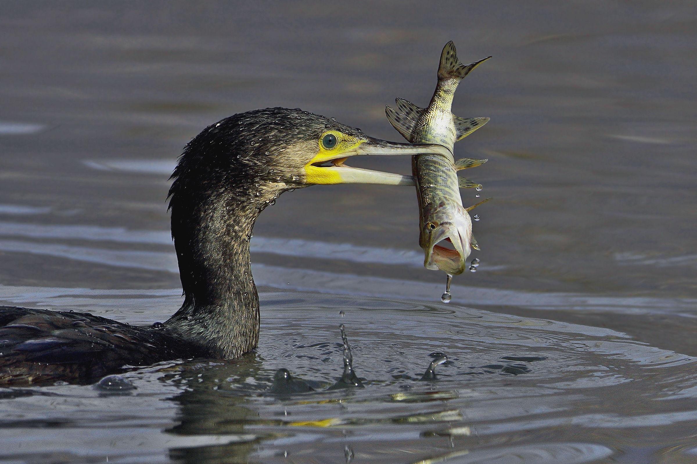 Pike tenacious....