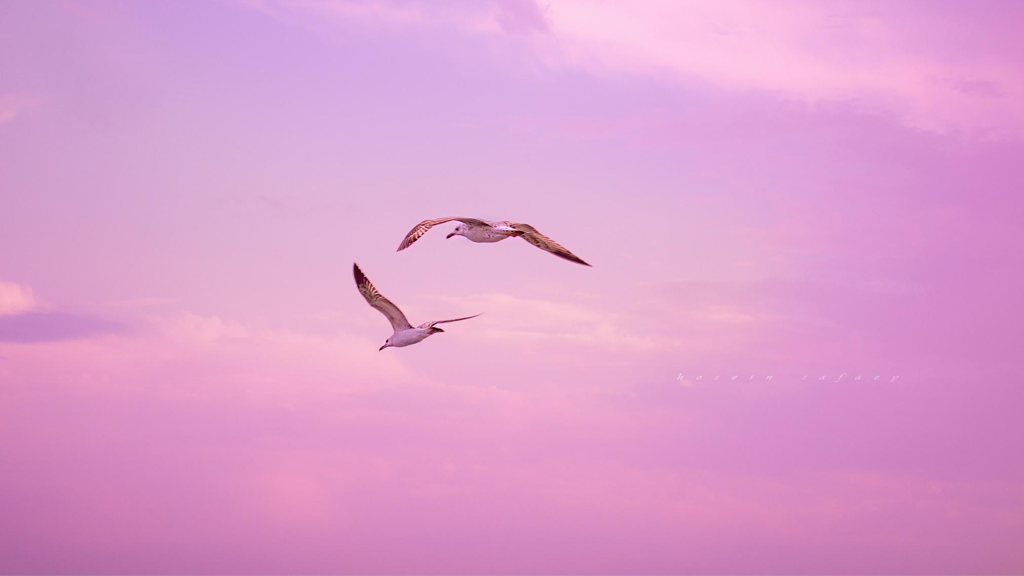 lovely fly...