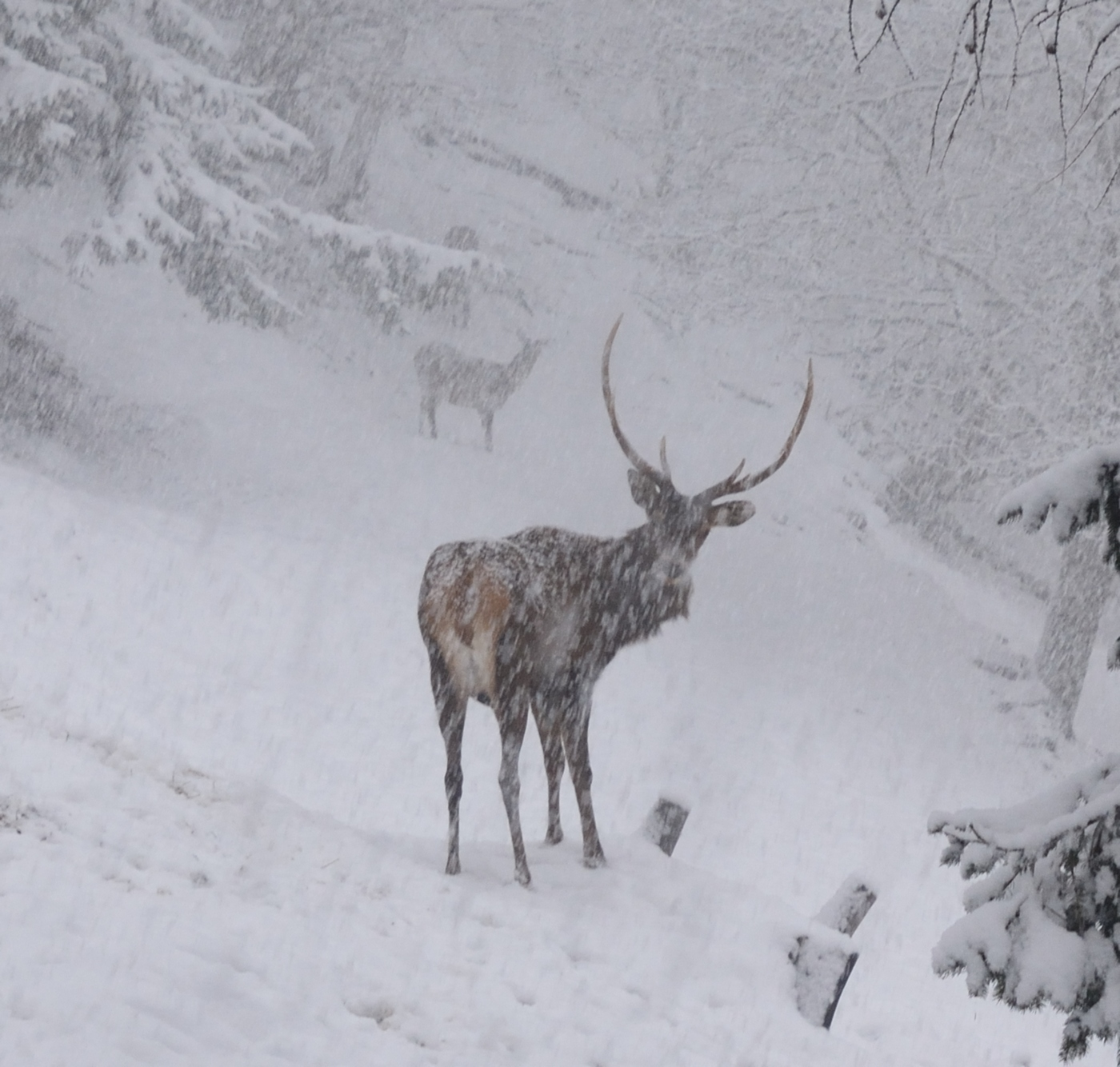 deer...