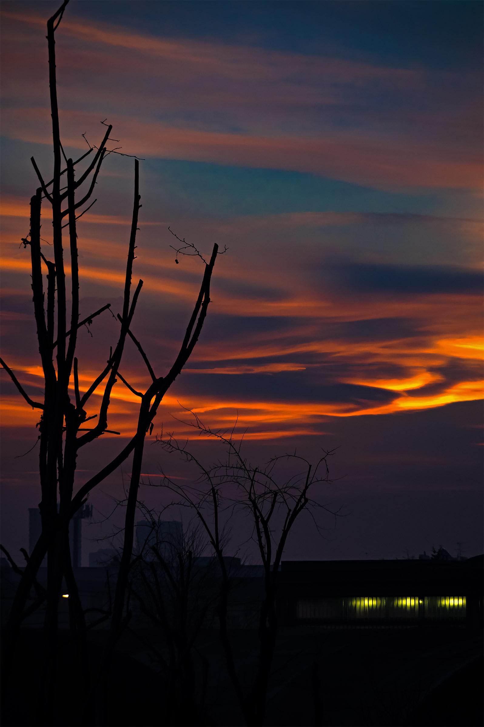 I colori del tramonto del giorno della potatura...