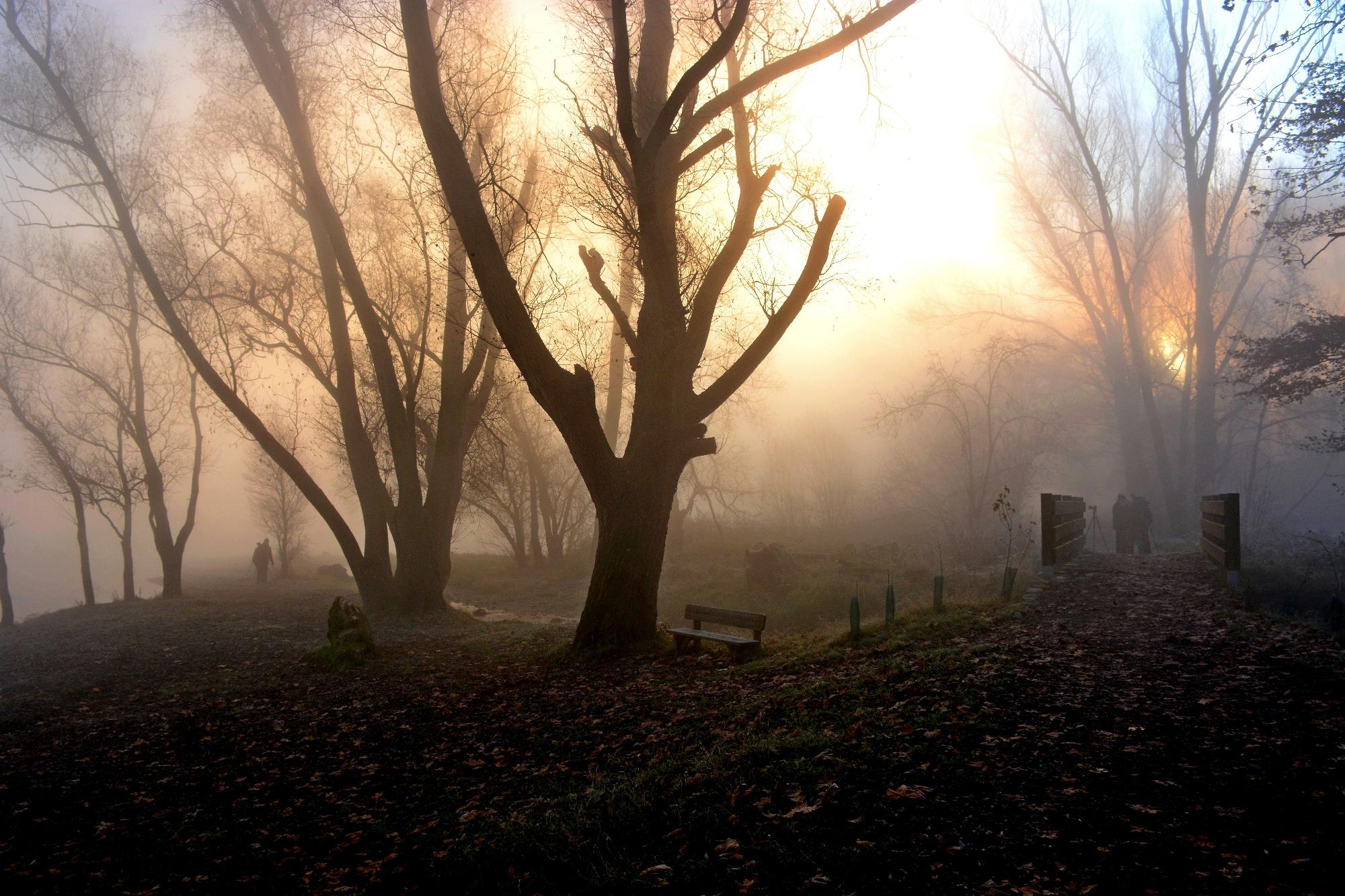 fog.......