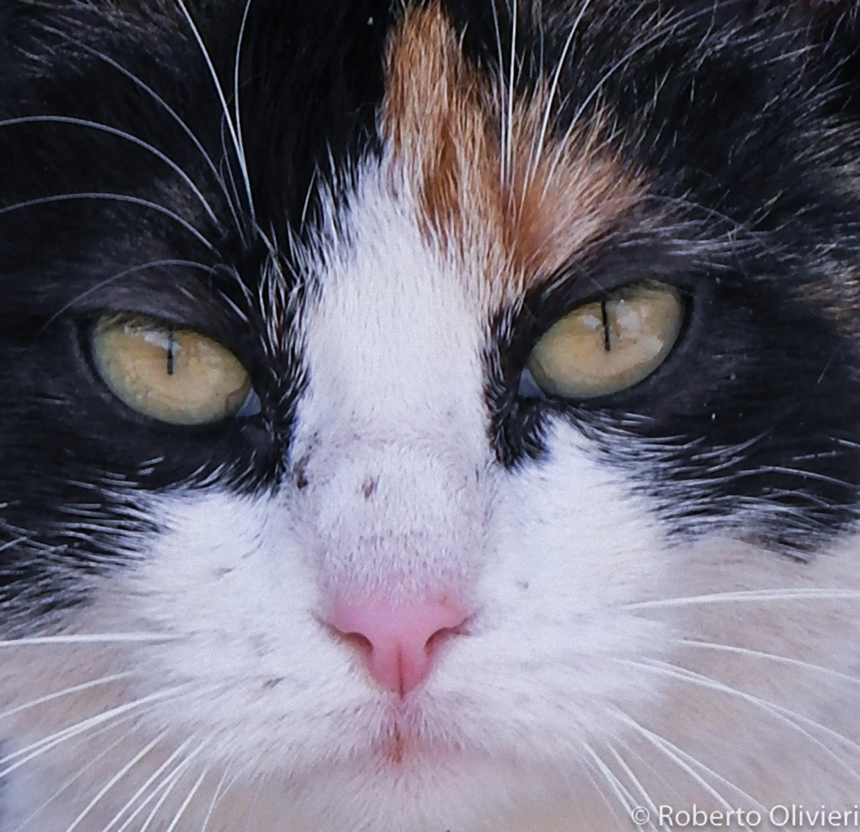 Ritratto di gatto.....LOL...