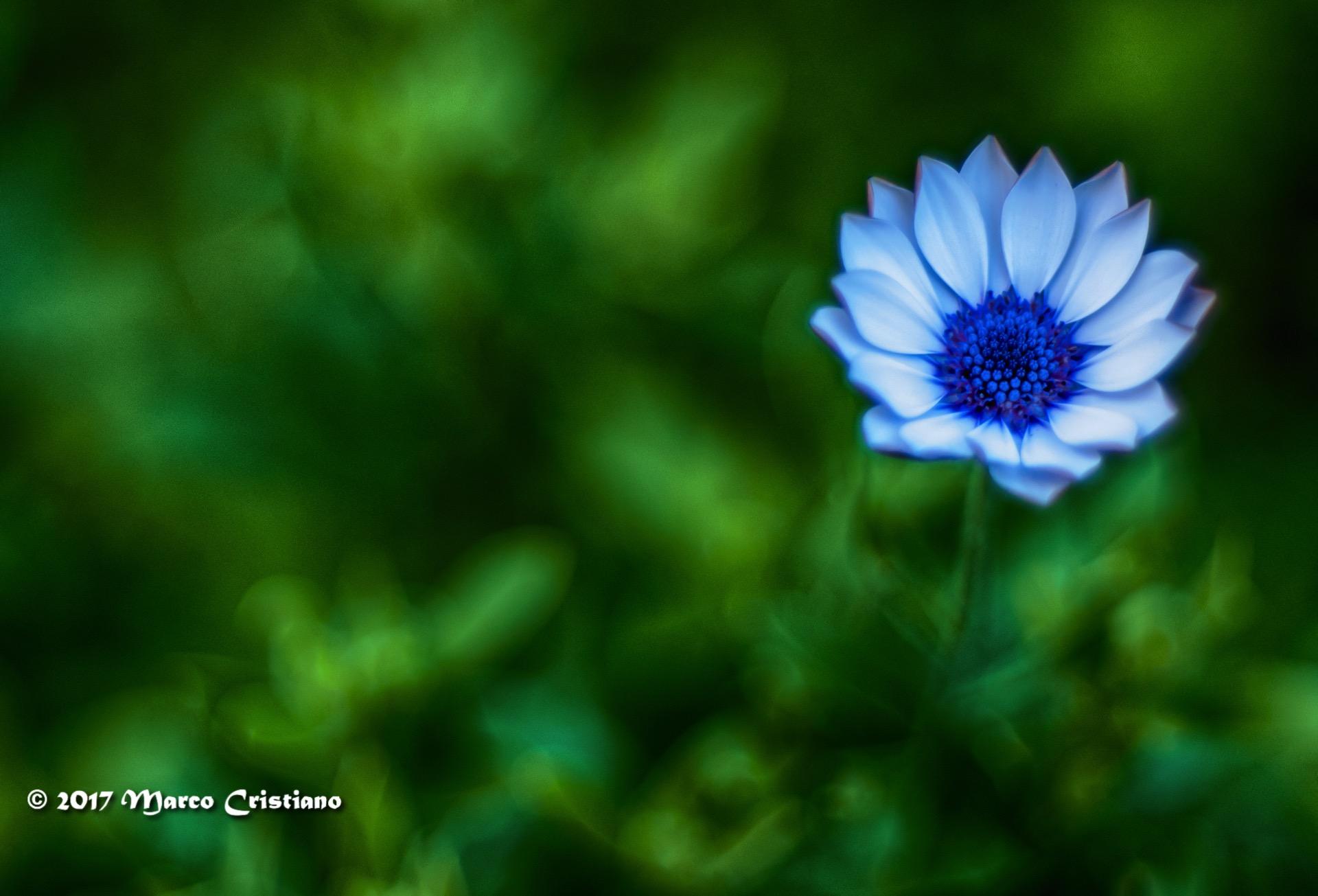 Poesia nell'erba.....