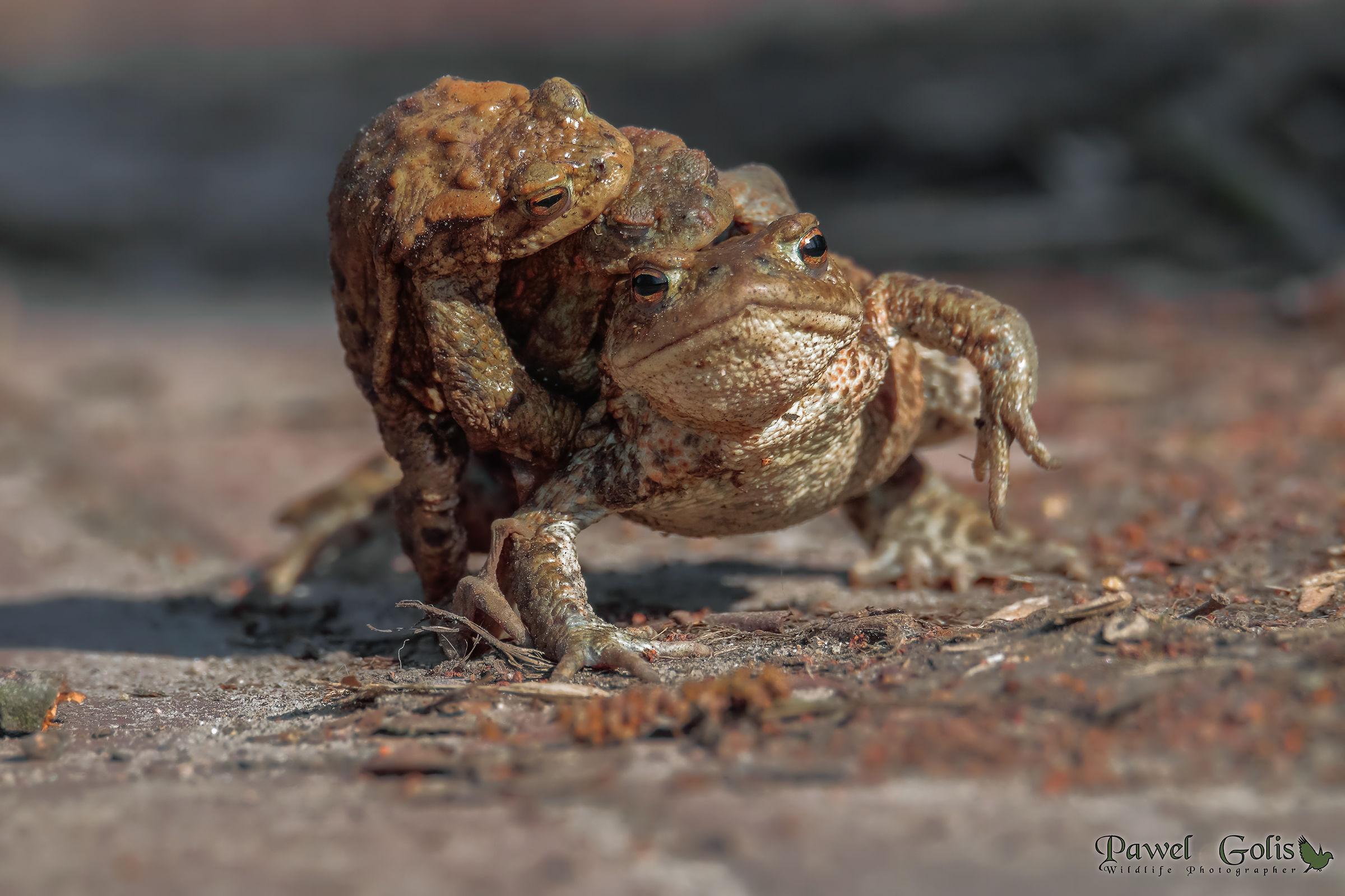 Crazy Frog...