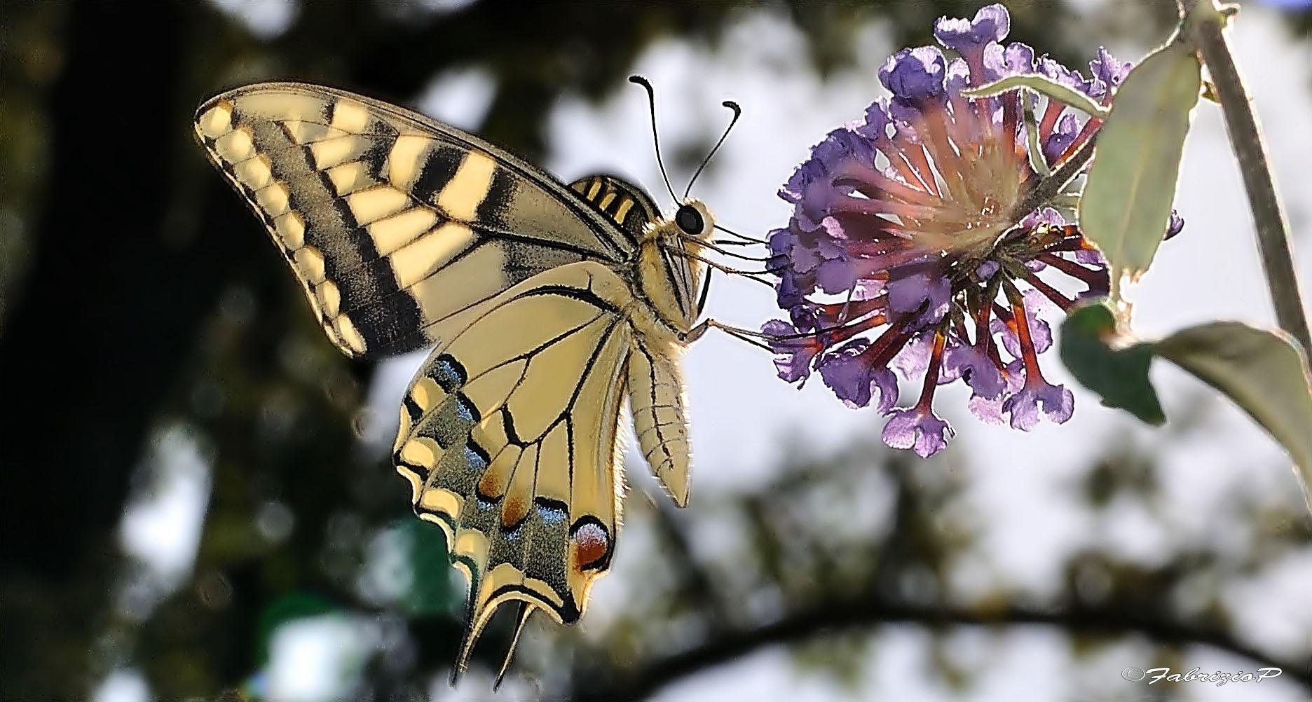 The elegance in a flutter...
