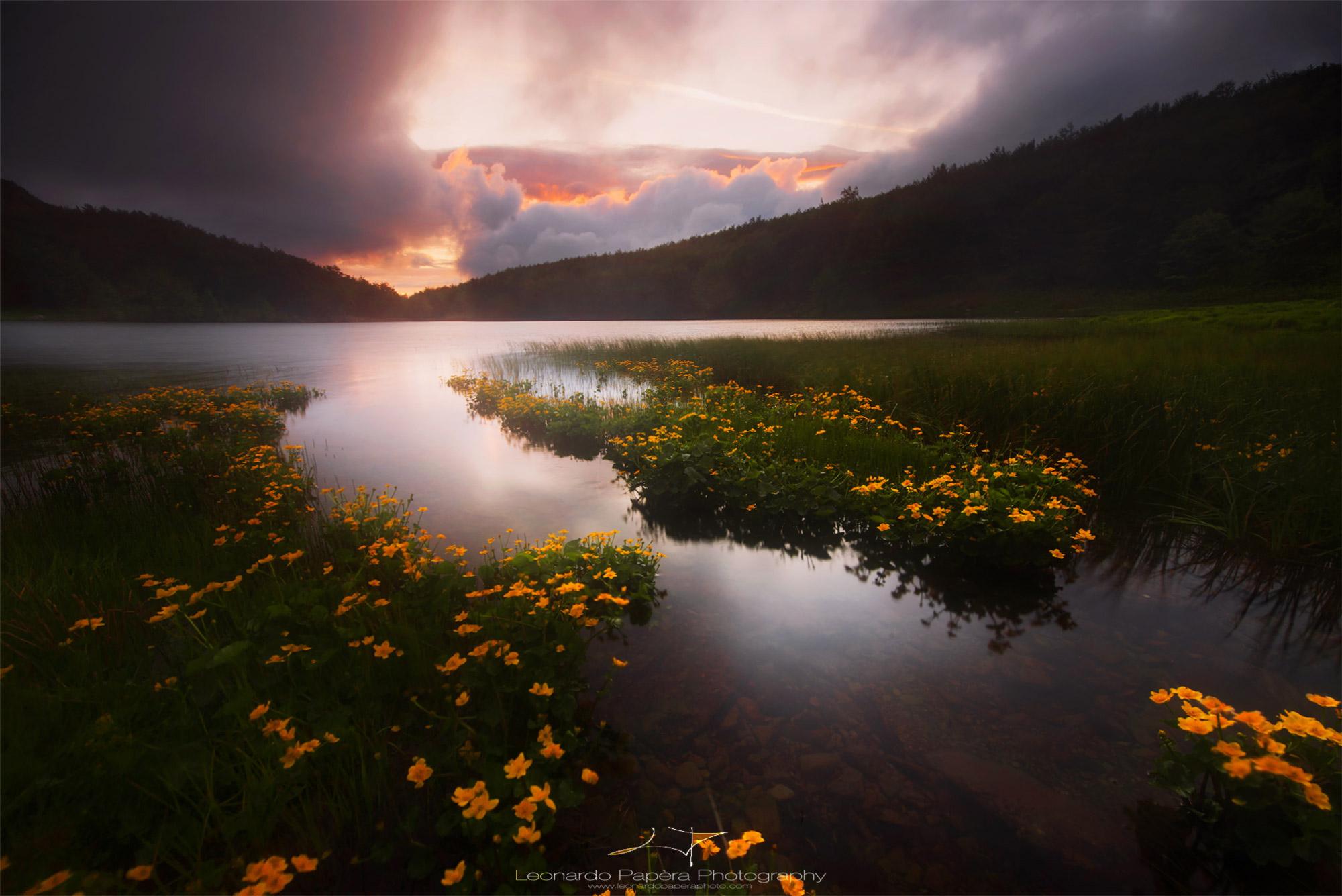 Pond Life...