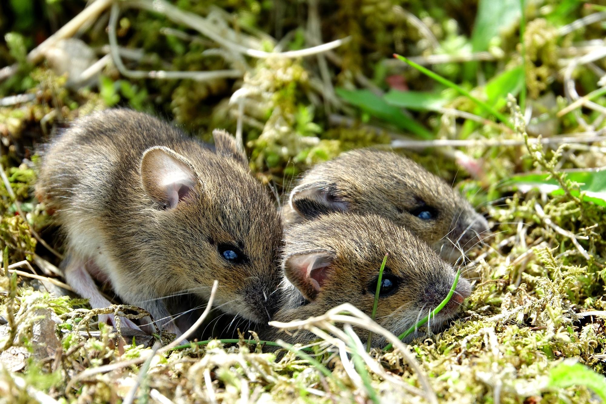 Sian tre piccoli fratellin.......