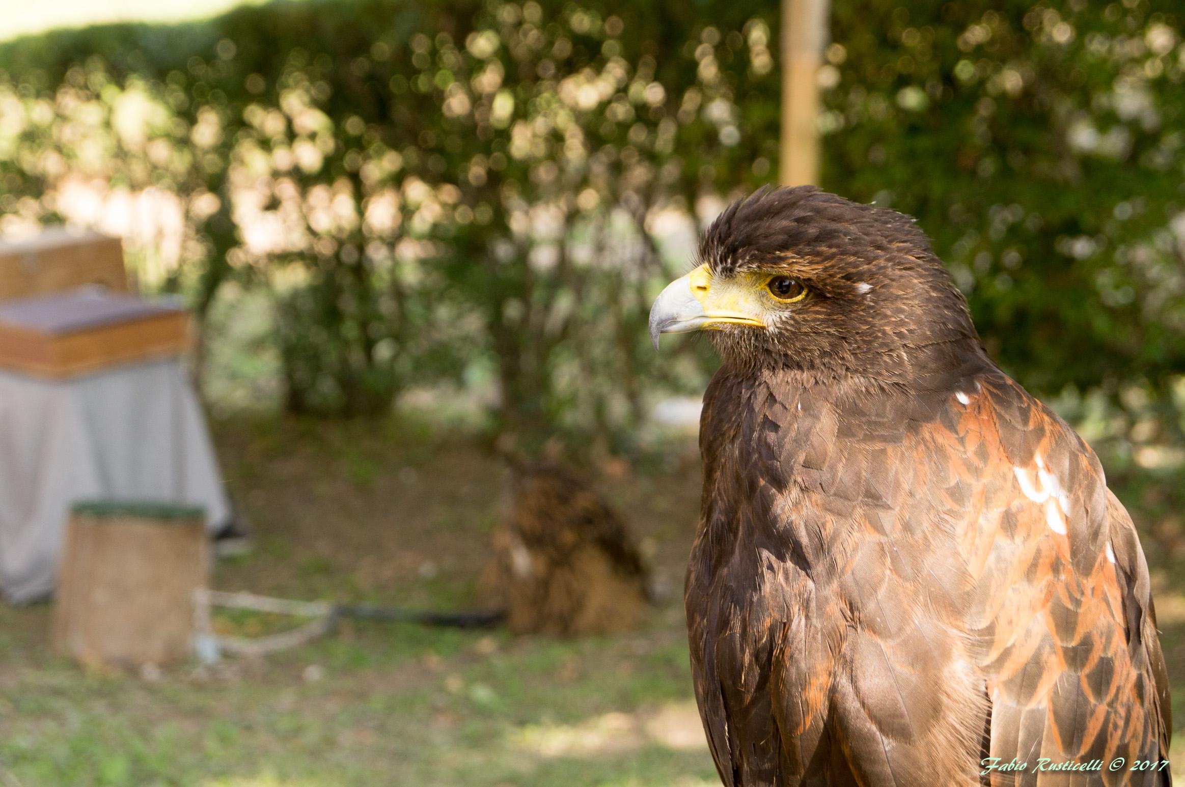 Portrait of bird of prey...