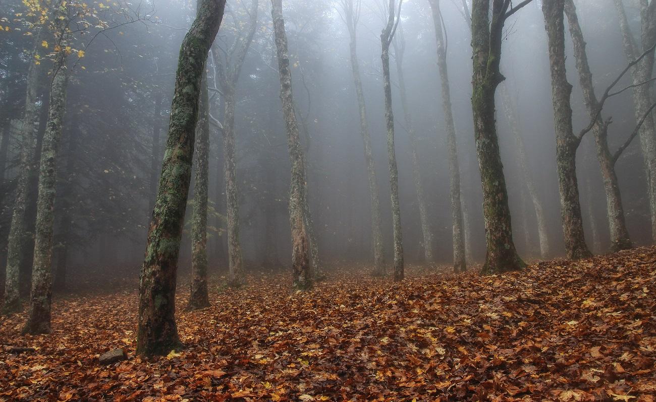 eternal fall...