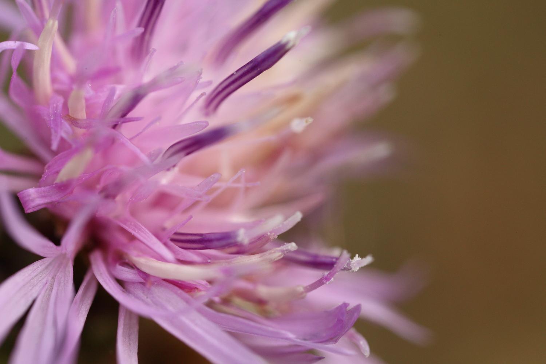 Fiore color rosa...