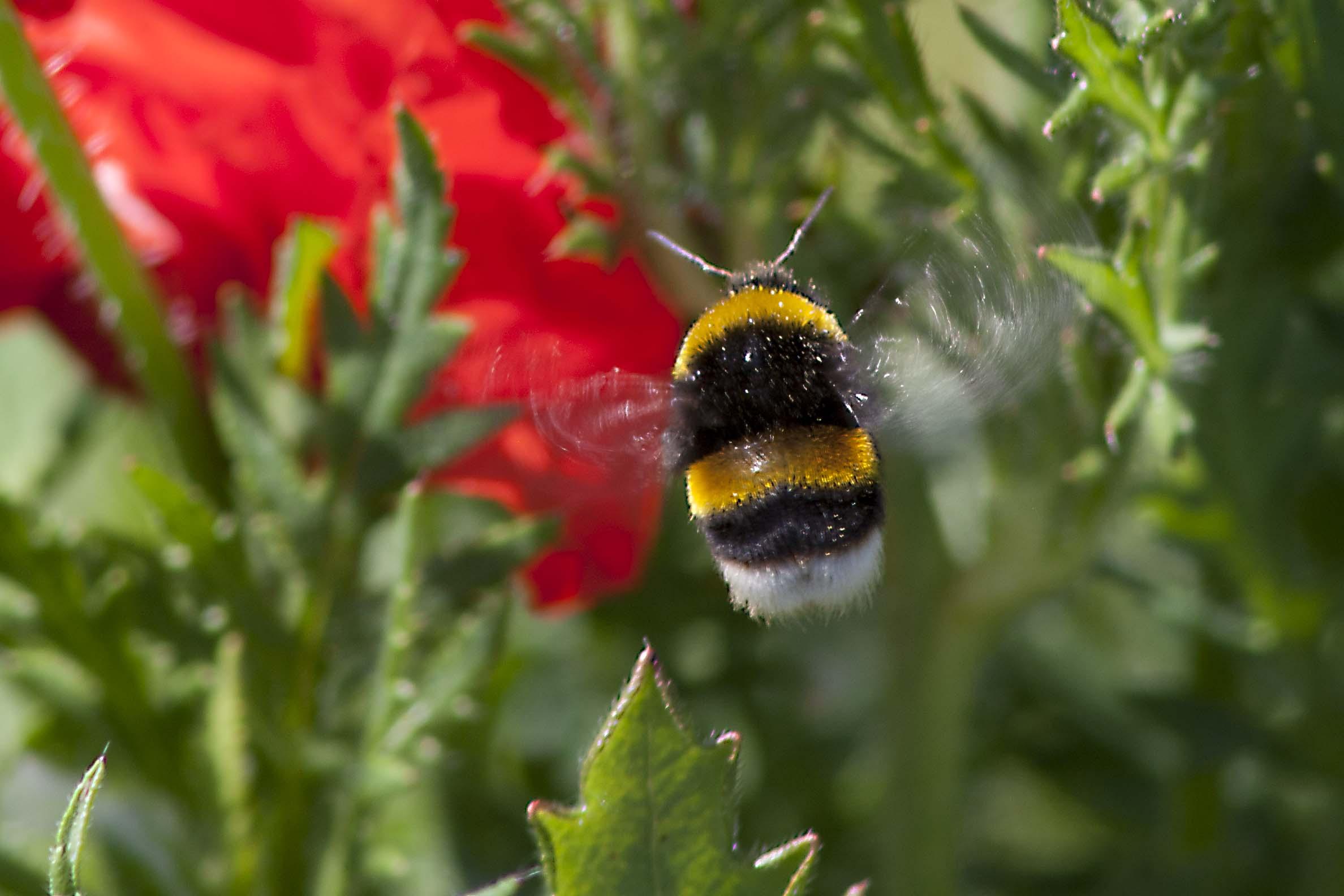 Except bumblebee 2...