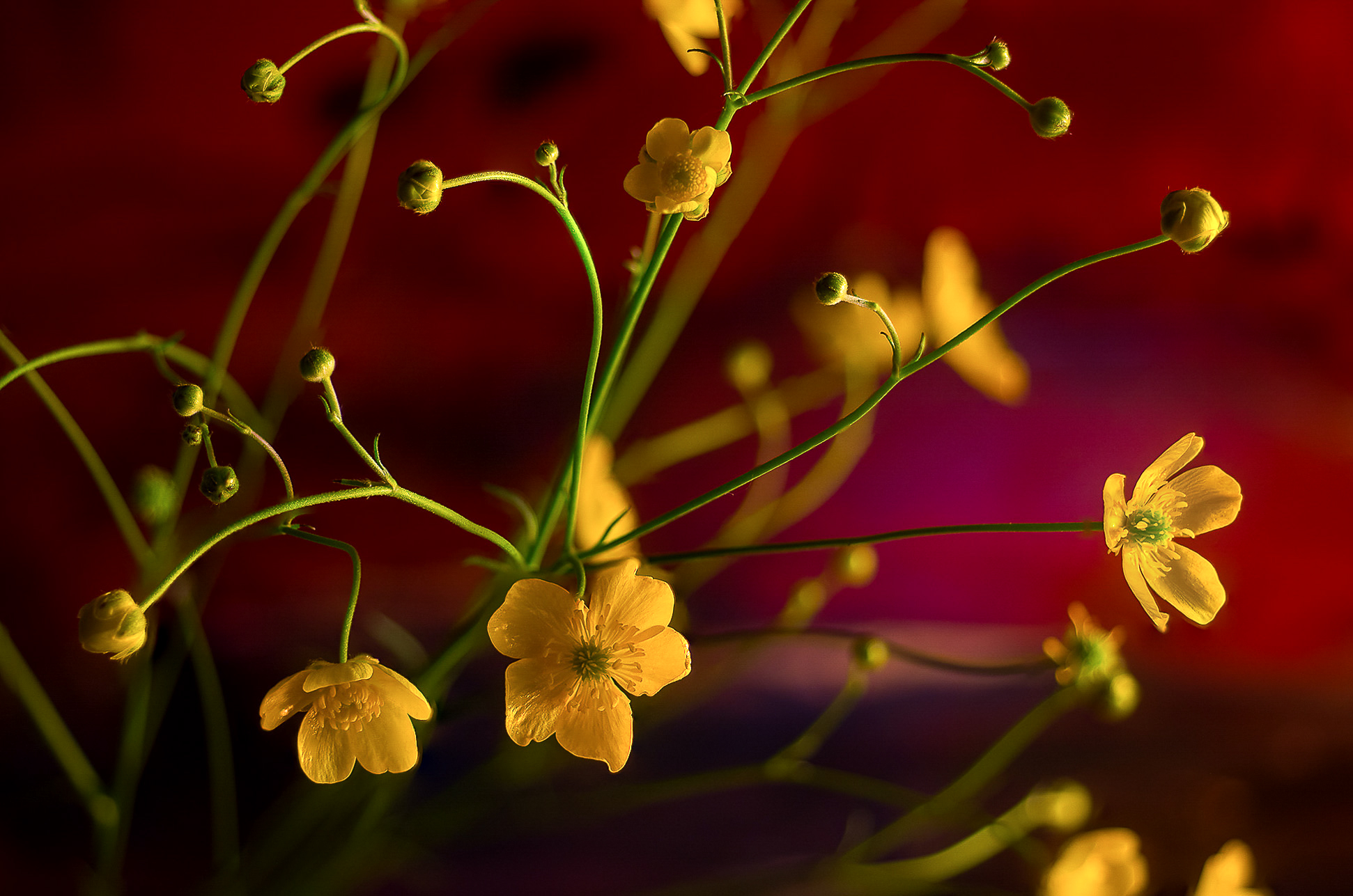 Yellow flowers...