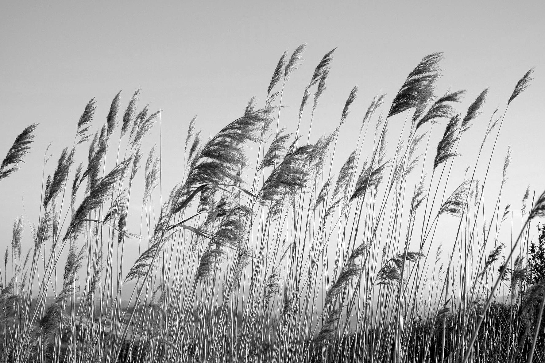 A nice breeze...