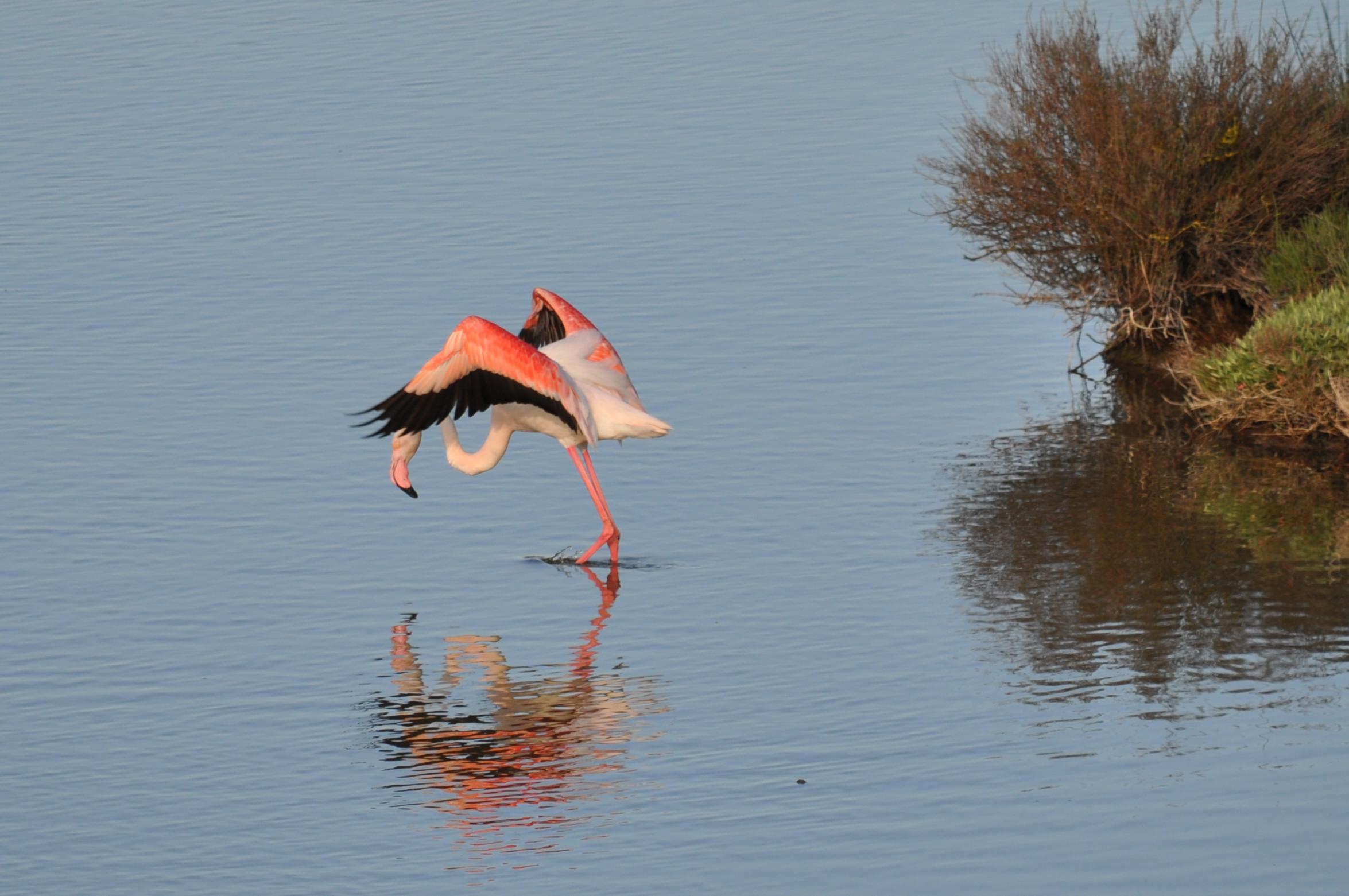 Flamingos 1...