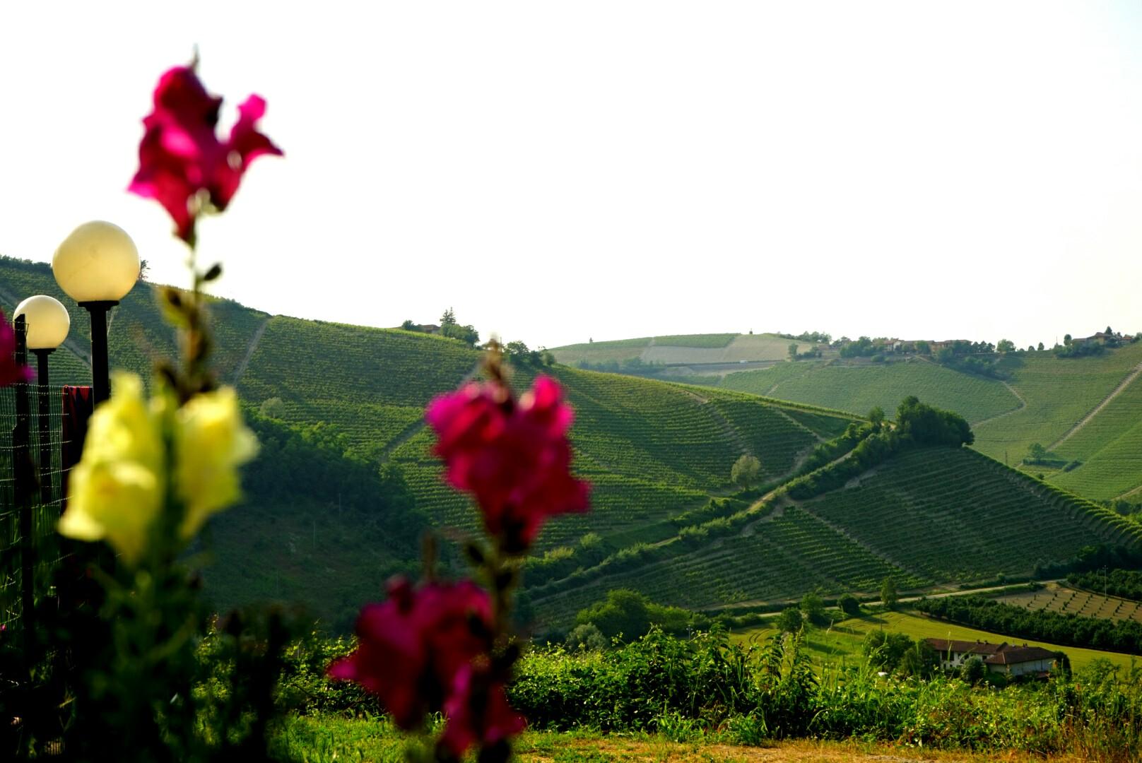 Wine landscape...