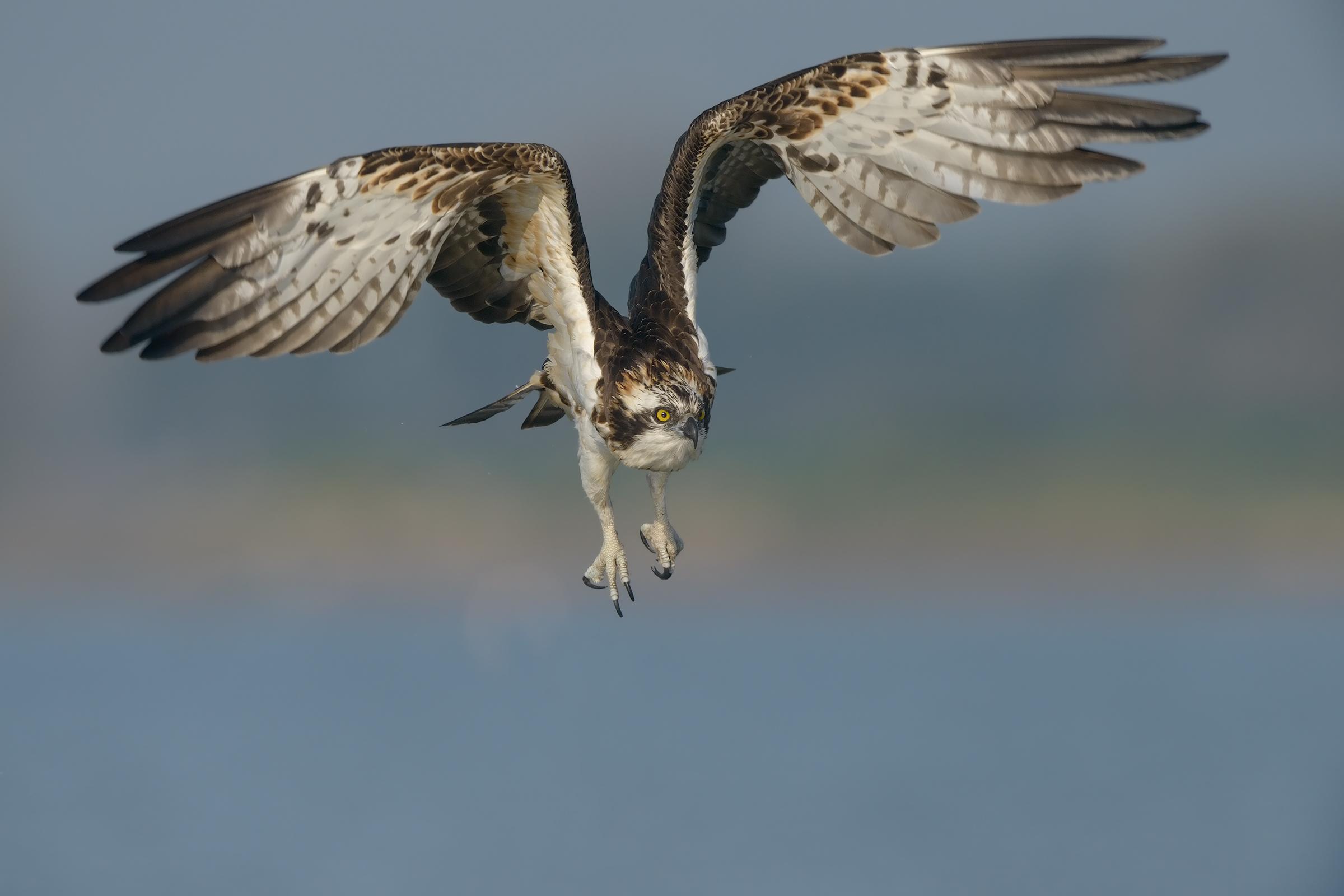 Fisherman taking off...