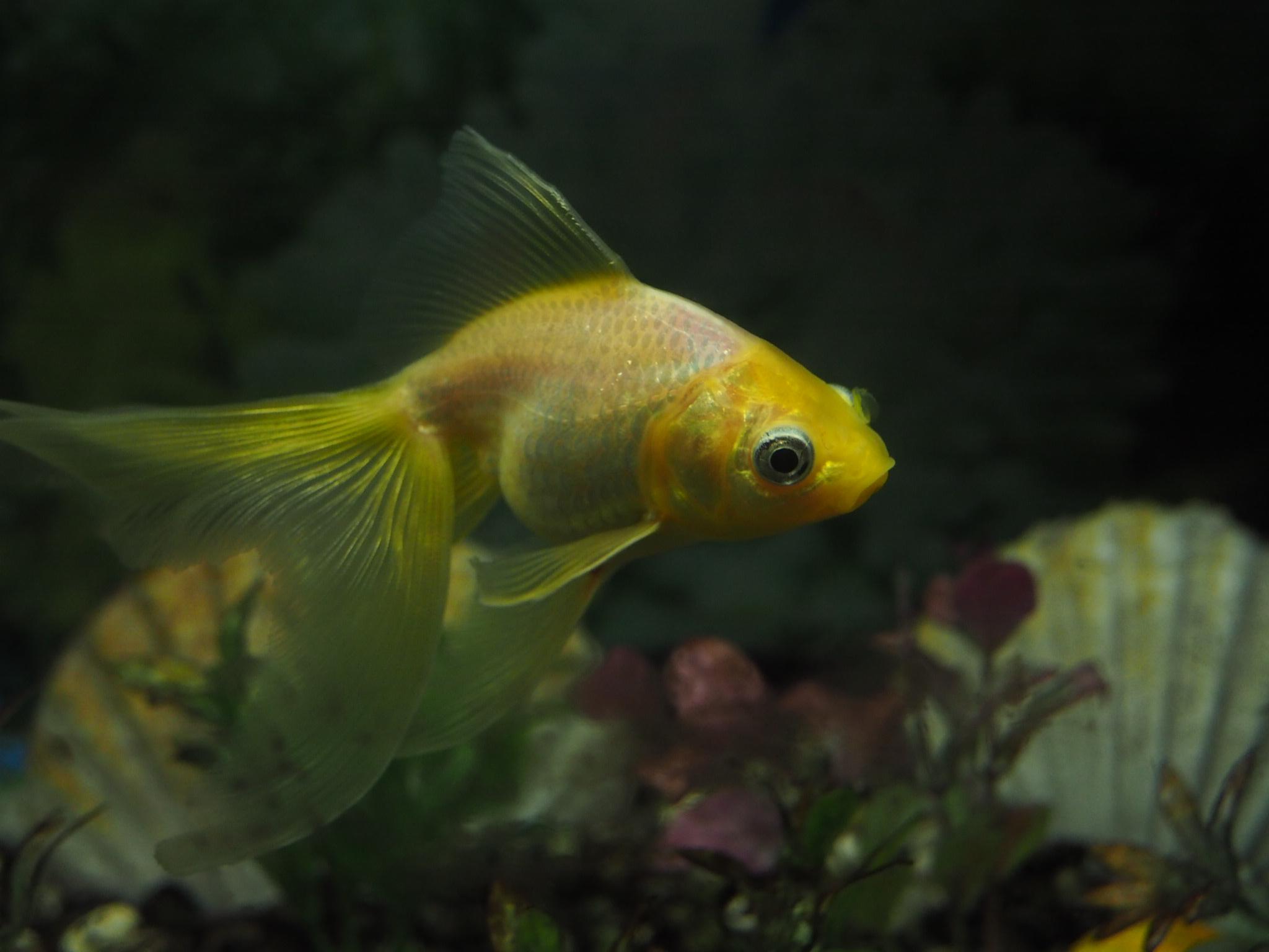 Pesce di un acquario...