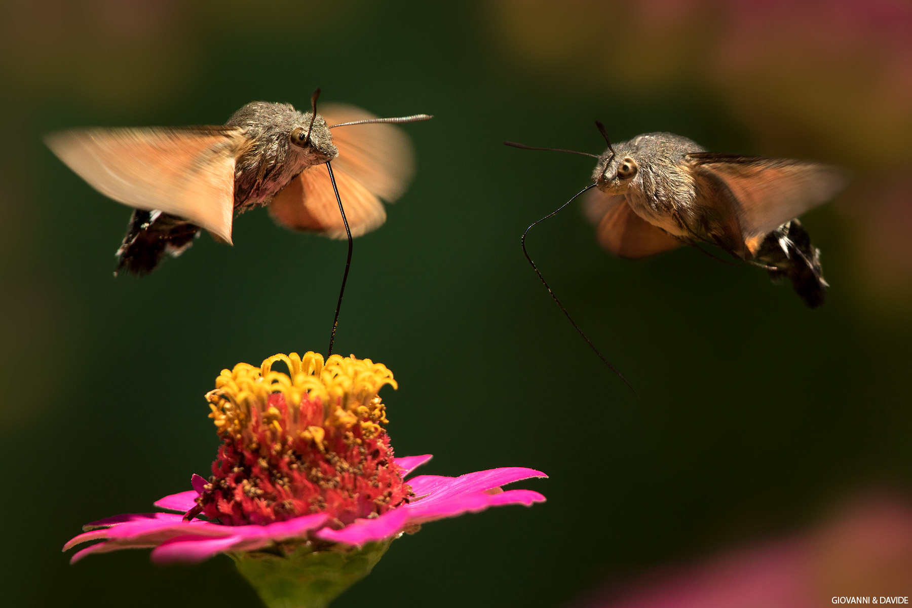 Hey! .. leave me some nectar...
