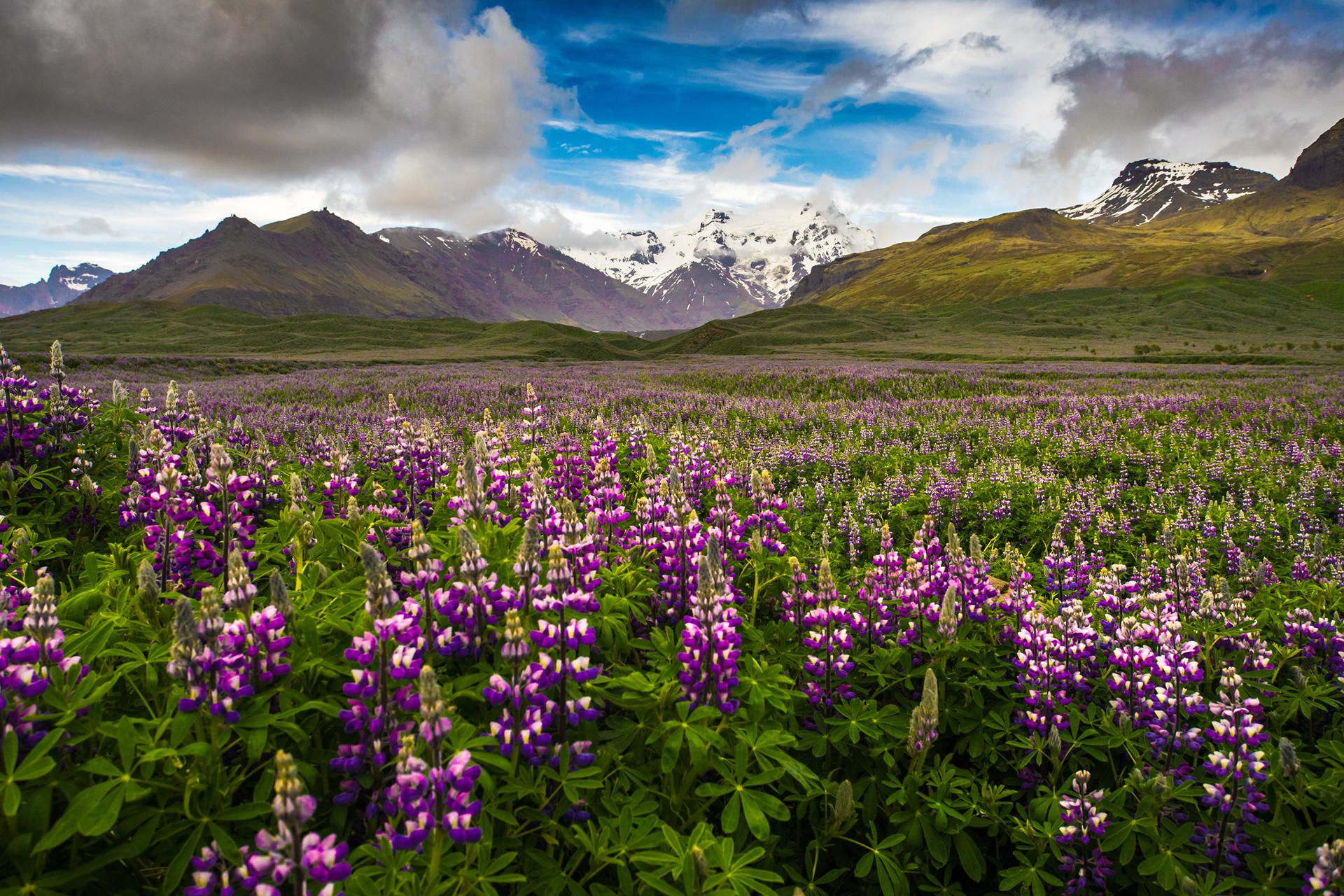 flowery field...