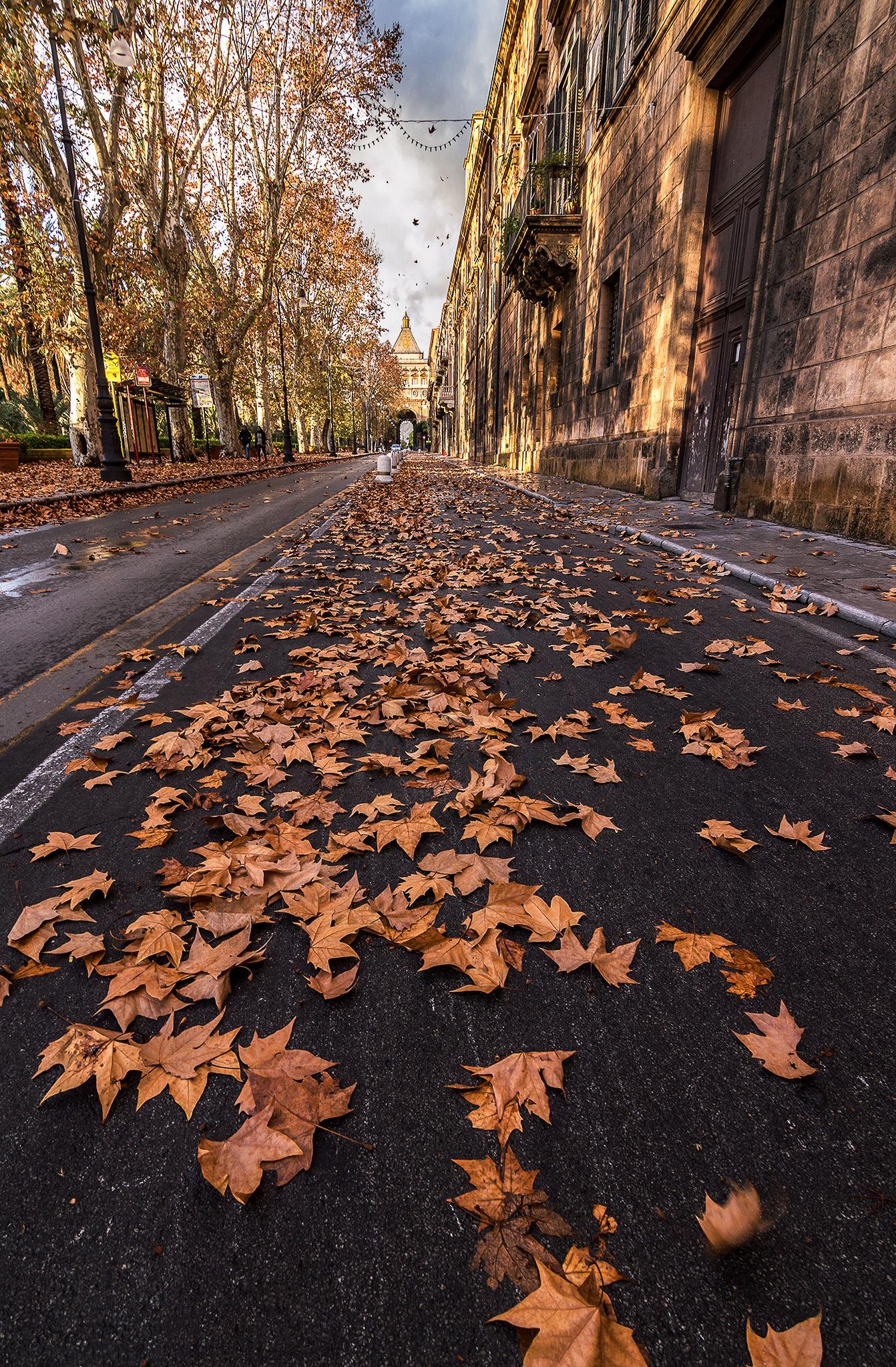 Leaf road...