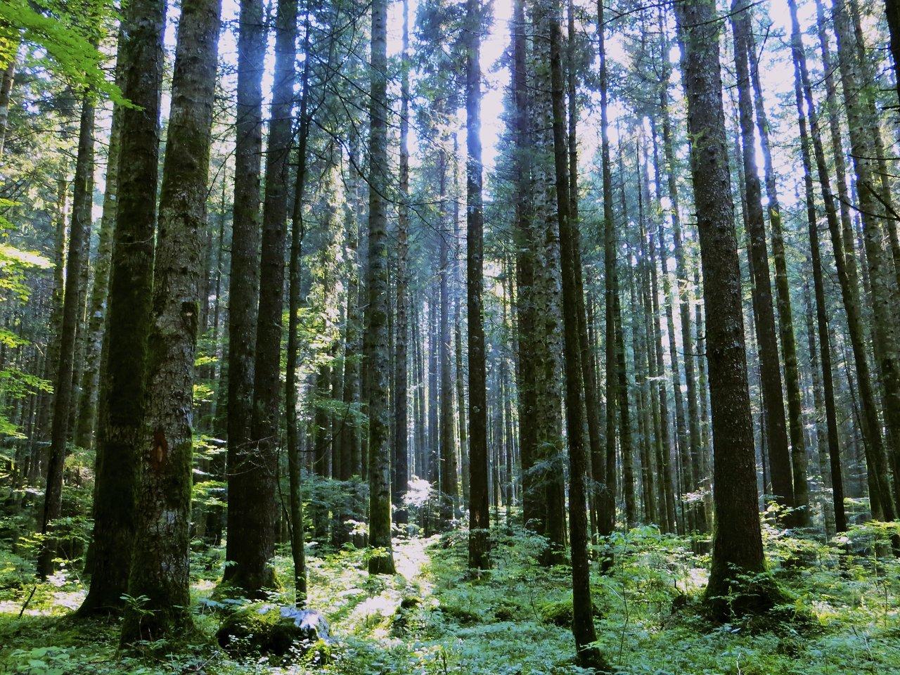 Luce fra gli alberi...