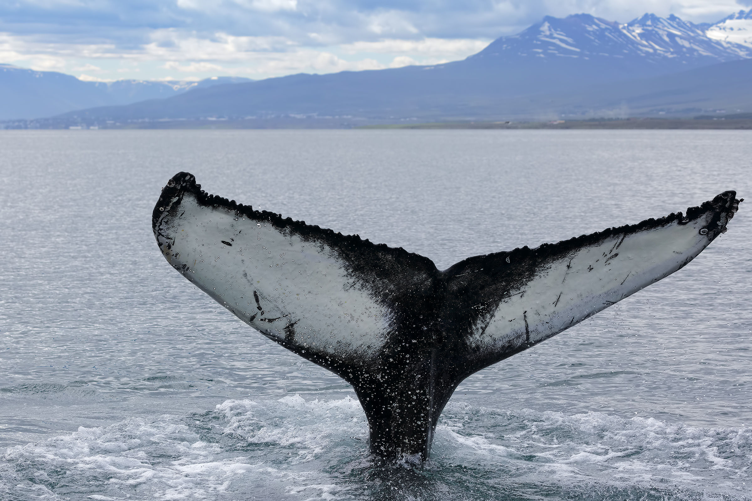 Another Whale...